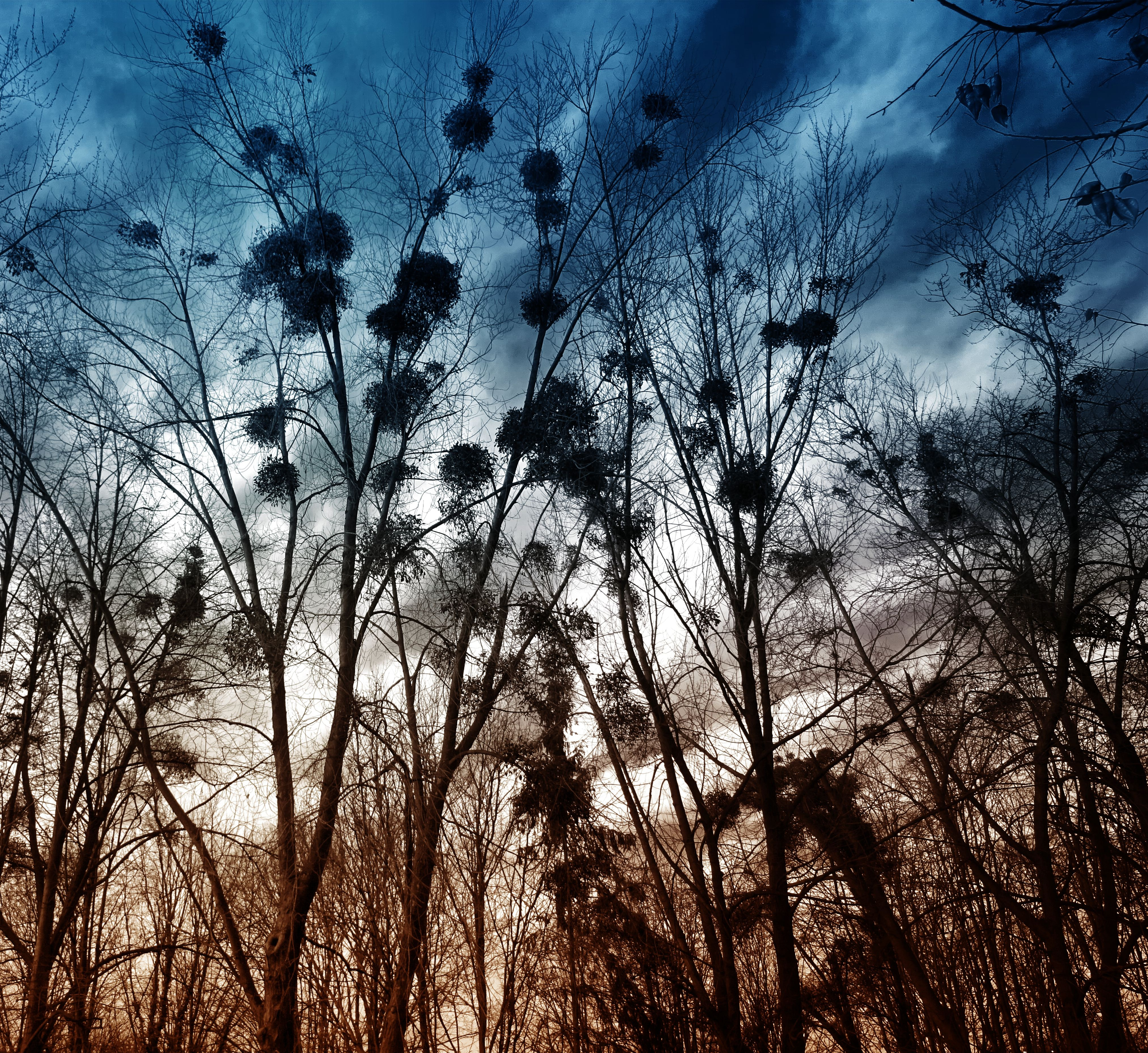 Silhouette of Trees Without Leaves, Branches, Clouds, Colors, Countryside, HQ Photo