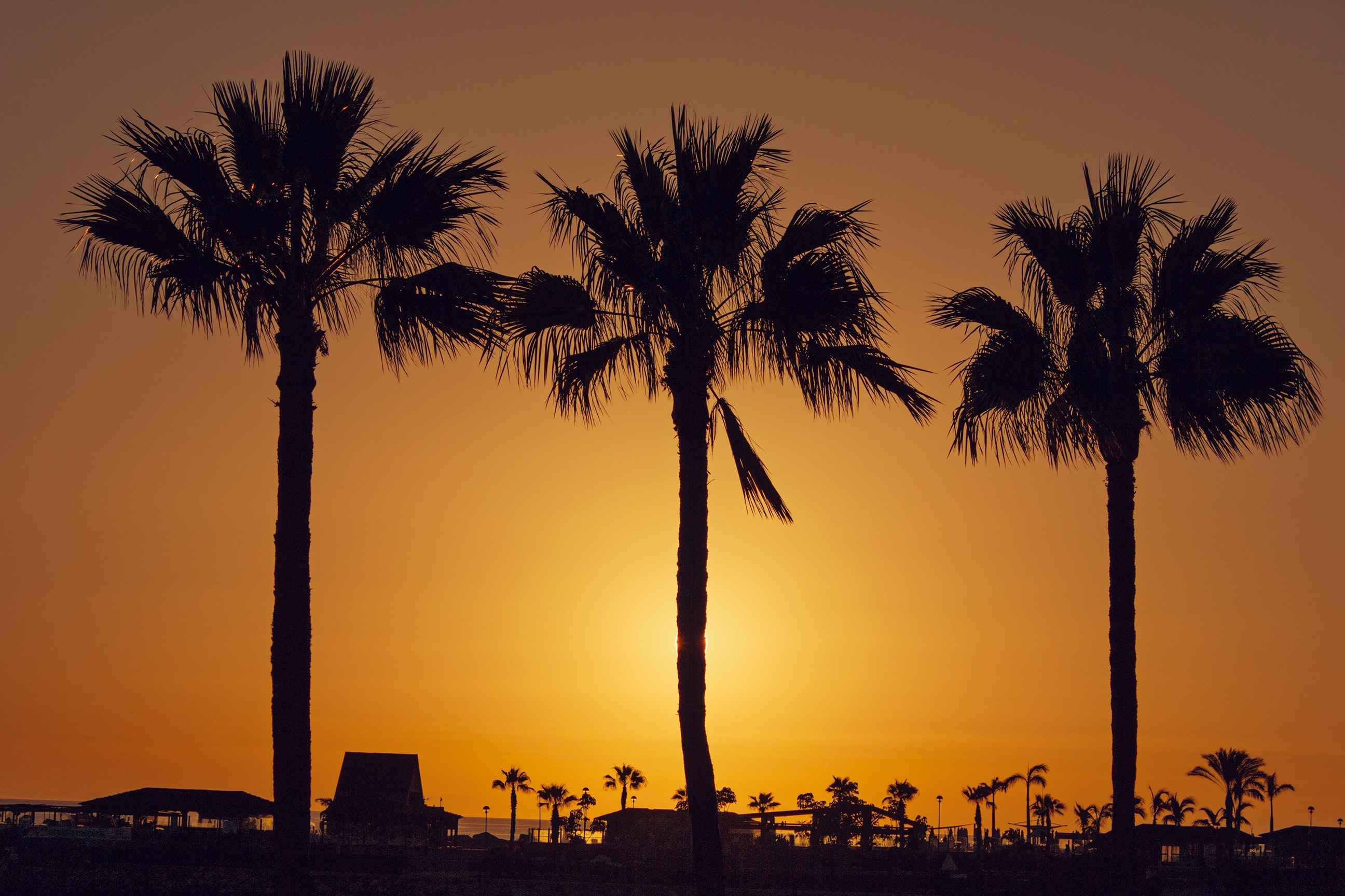 Silhouette palm trees on beach against sky photo