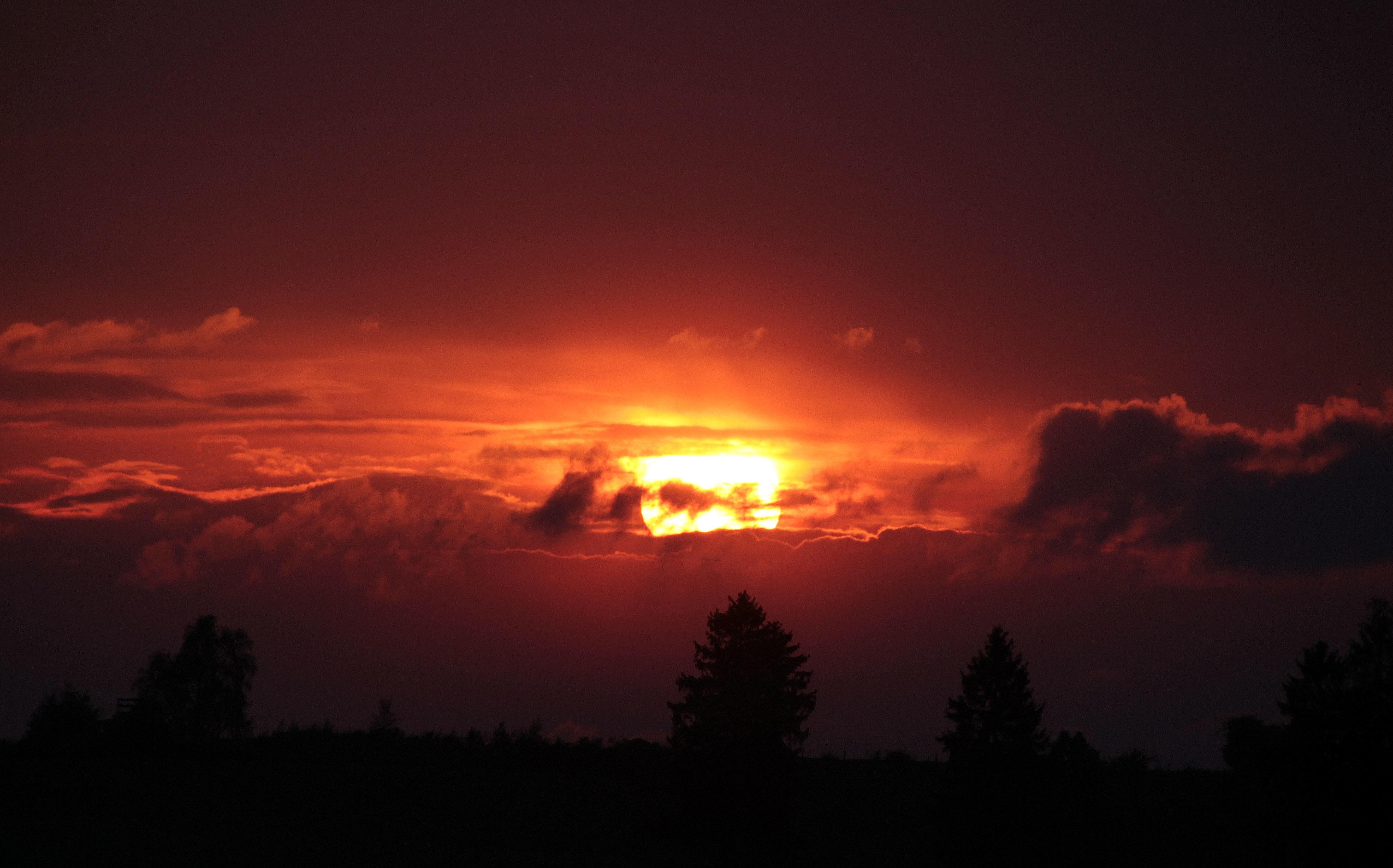 Silhouette Photo of a Sky and Trees, Sun, Sunrise, Sunset, Trees, HQ Photo