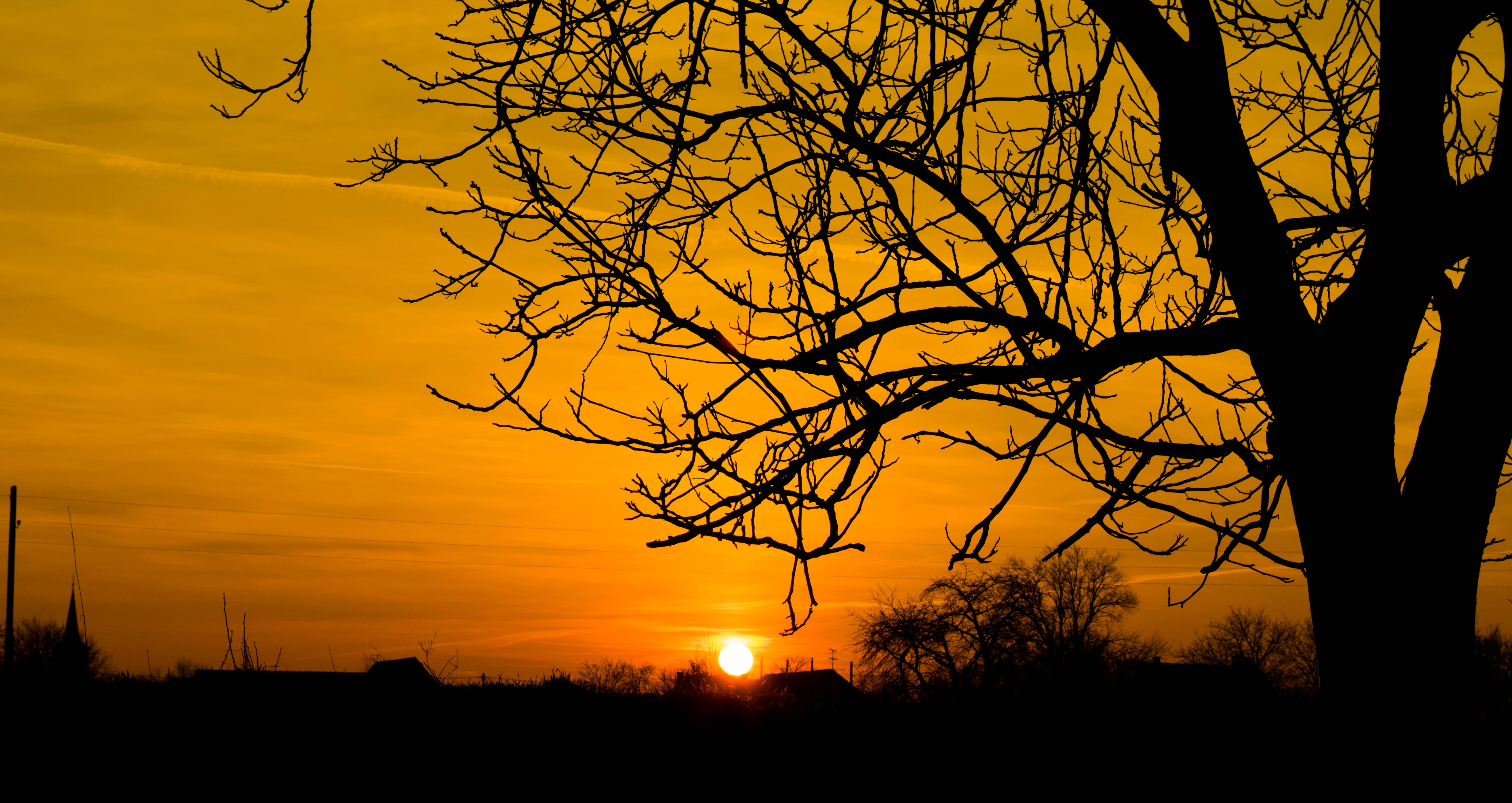 Silhouette Photo of Bare Tree, Backlit, Nature, Wood, Trees, HQ Photo