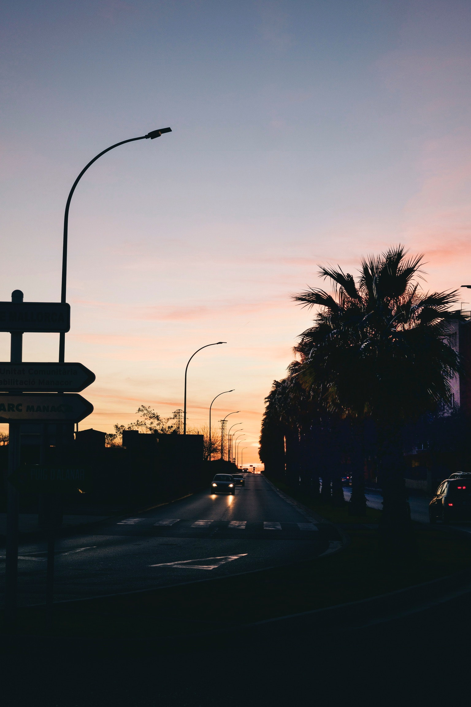 Silhouette Photo of Road Between Majesty Palm, Backlit, Palms, Transportation system, Sunset, HQ Photo