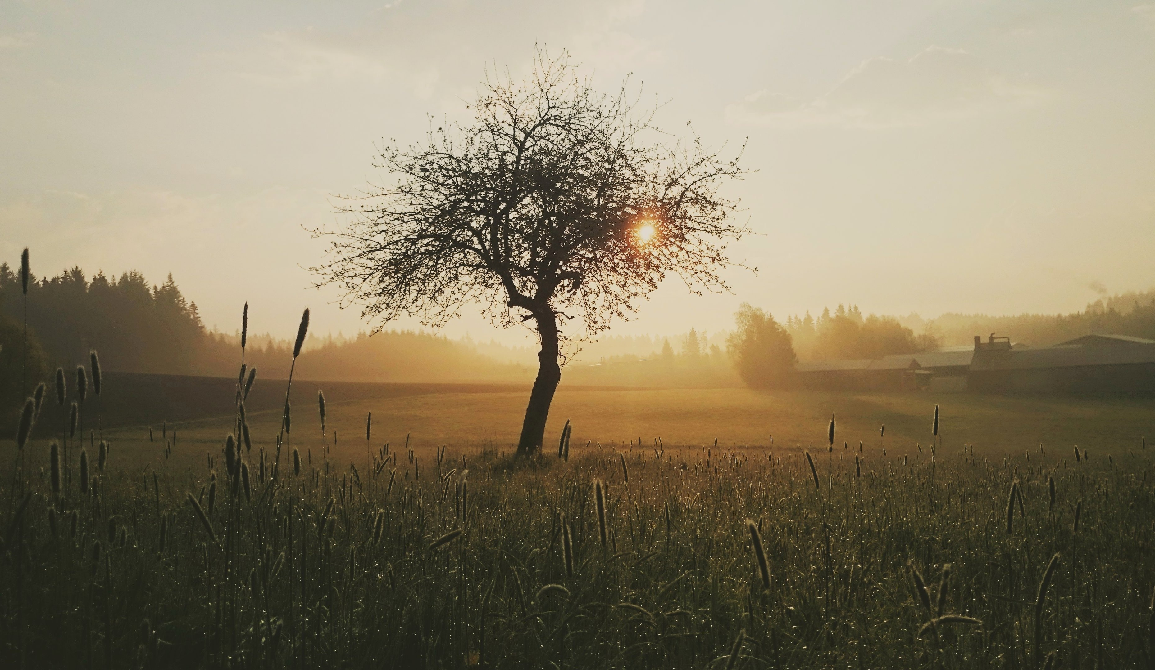 Silhouette photo of tree and grass during golden hour