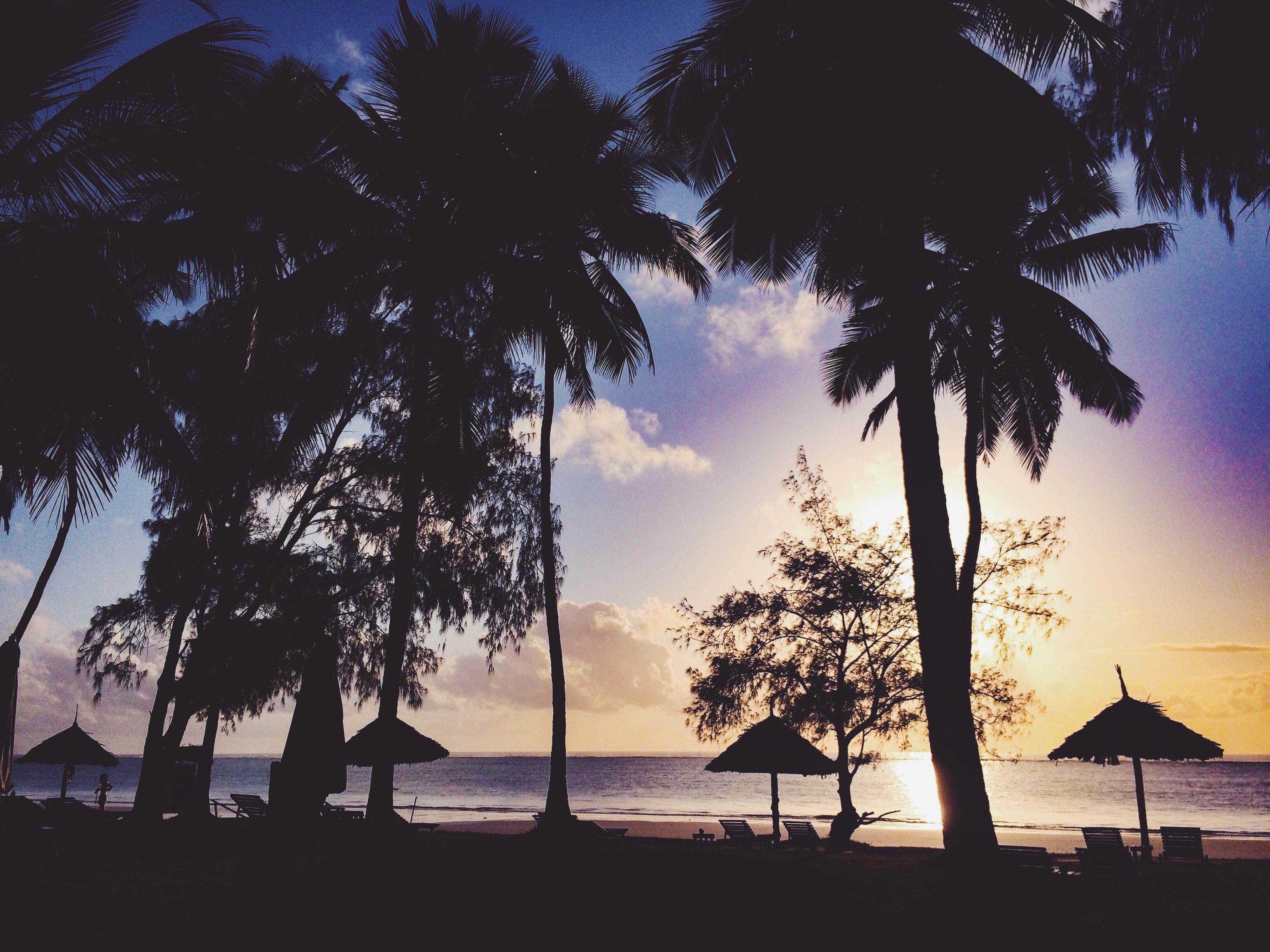 Silhouette Photo Of Trees, Backlit, Beach, Dawn, Dusk, HQ Photo