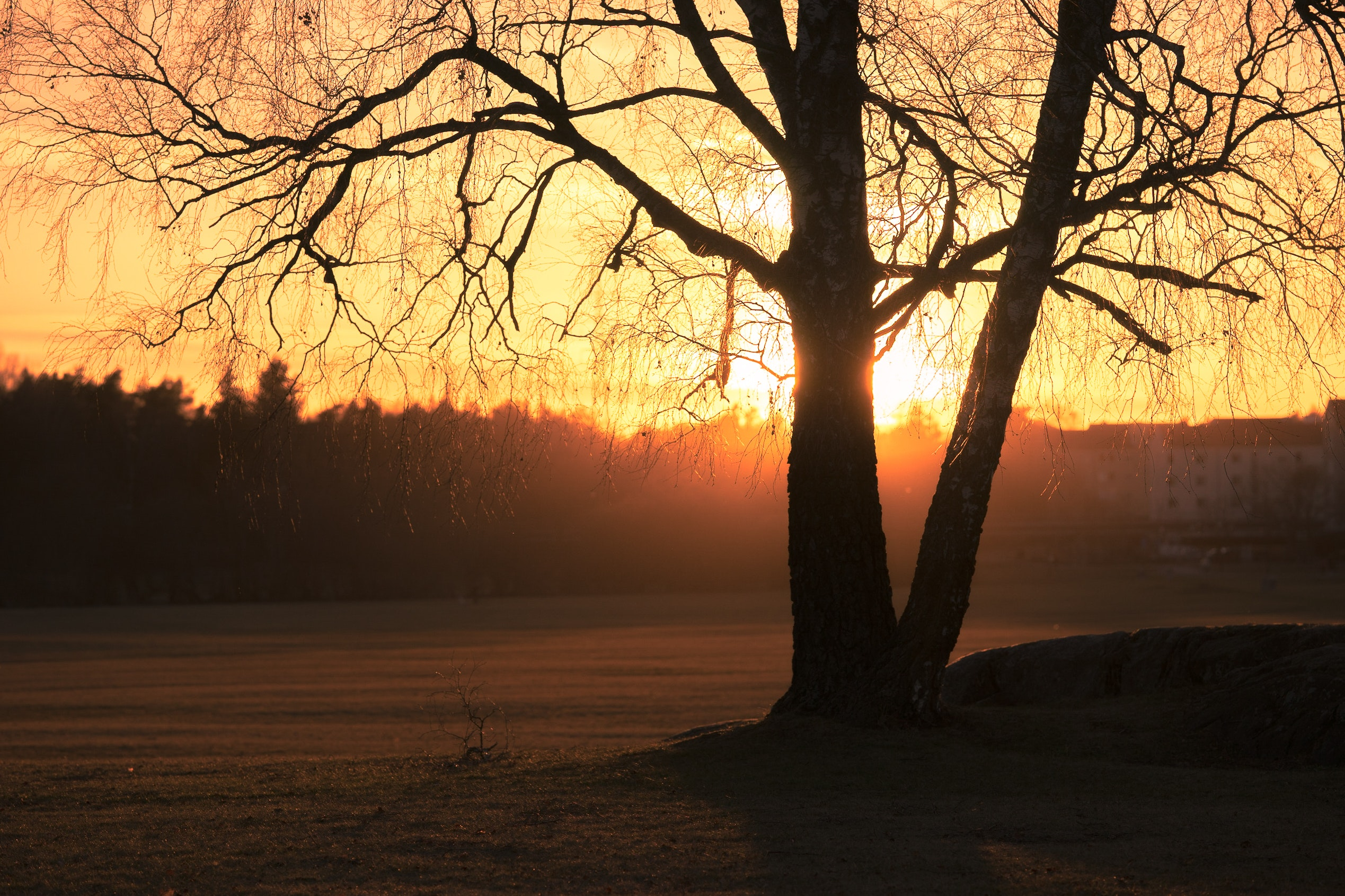 Silhouette Photo of Trees during Golden Hour, Backlit, Dawn, Dusk, Landscape, HQ Photo