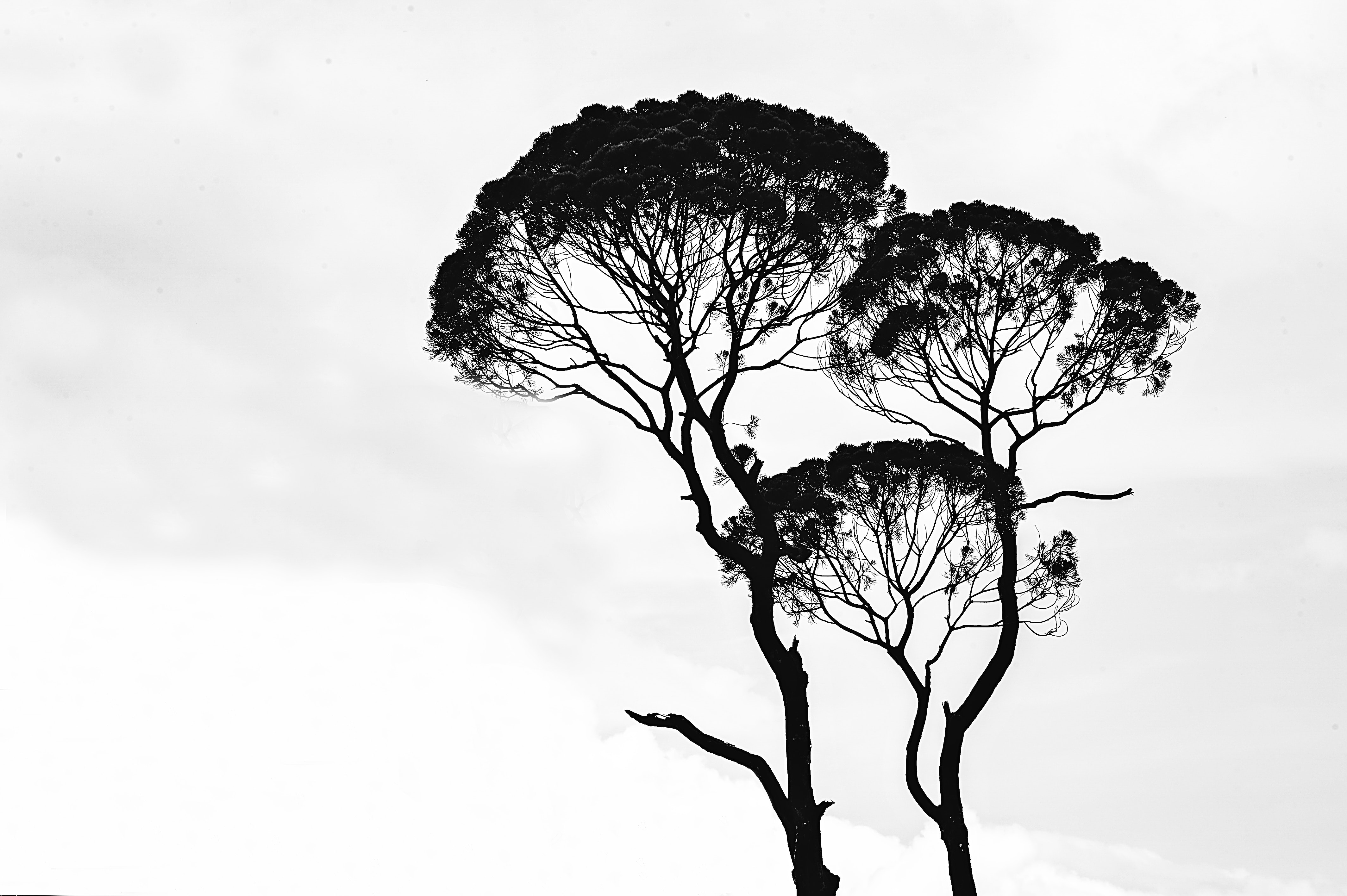 Silhouette photo of trees