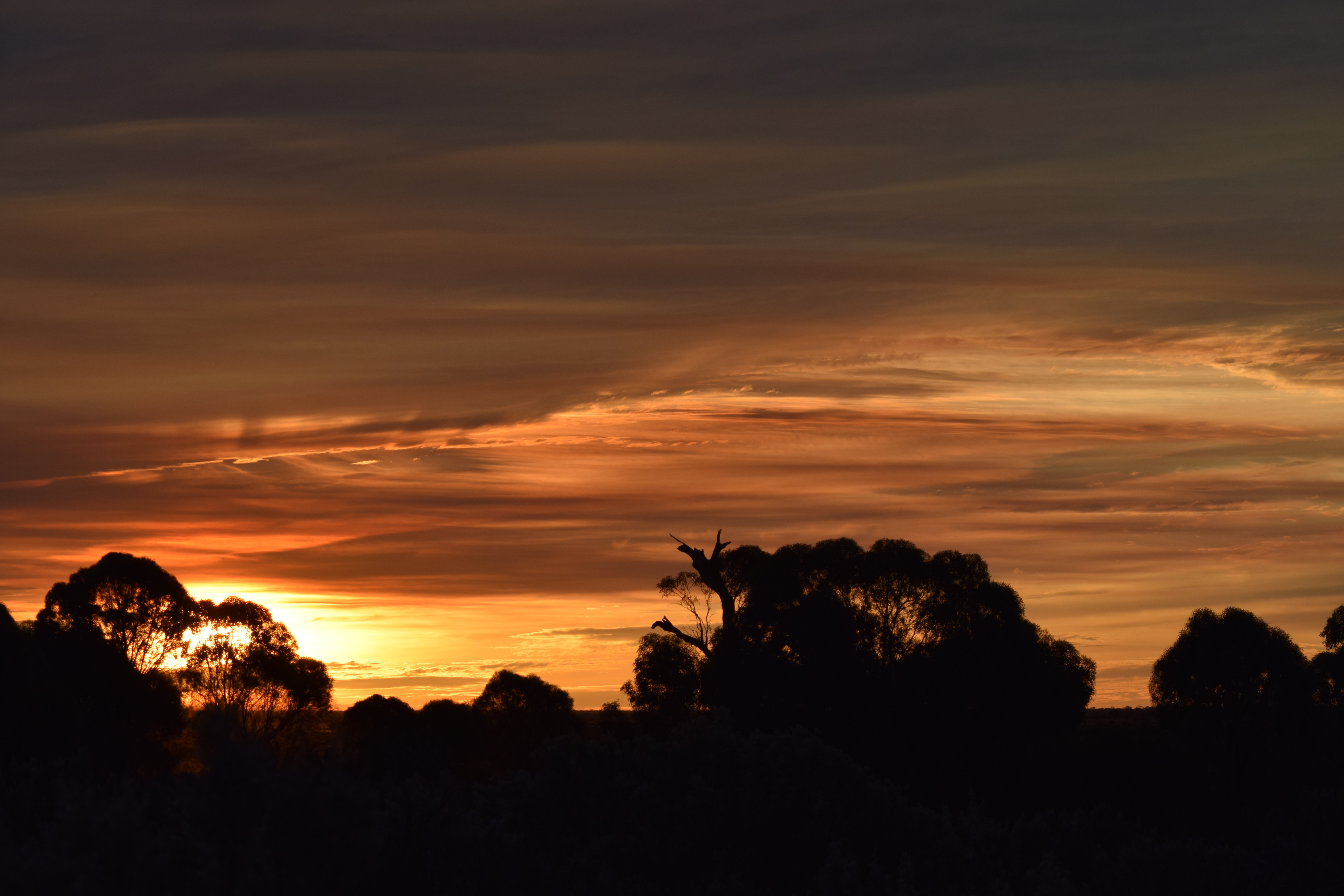 Silhouette Photography of Tress during Sunset, Silhouette, Scenic, Scenery, Peaceful, HQ Photo