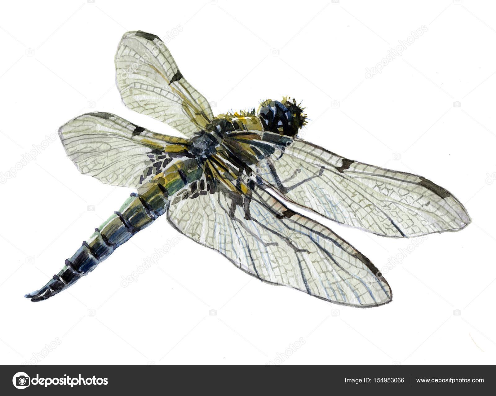 Single dragonfly photo