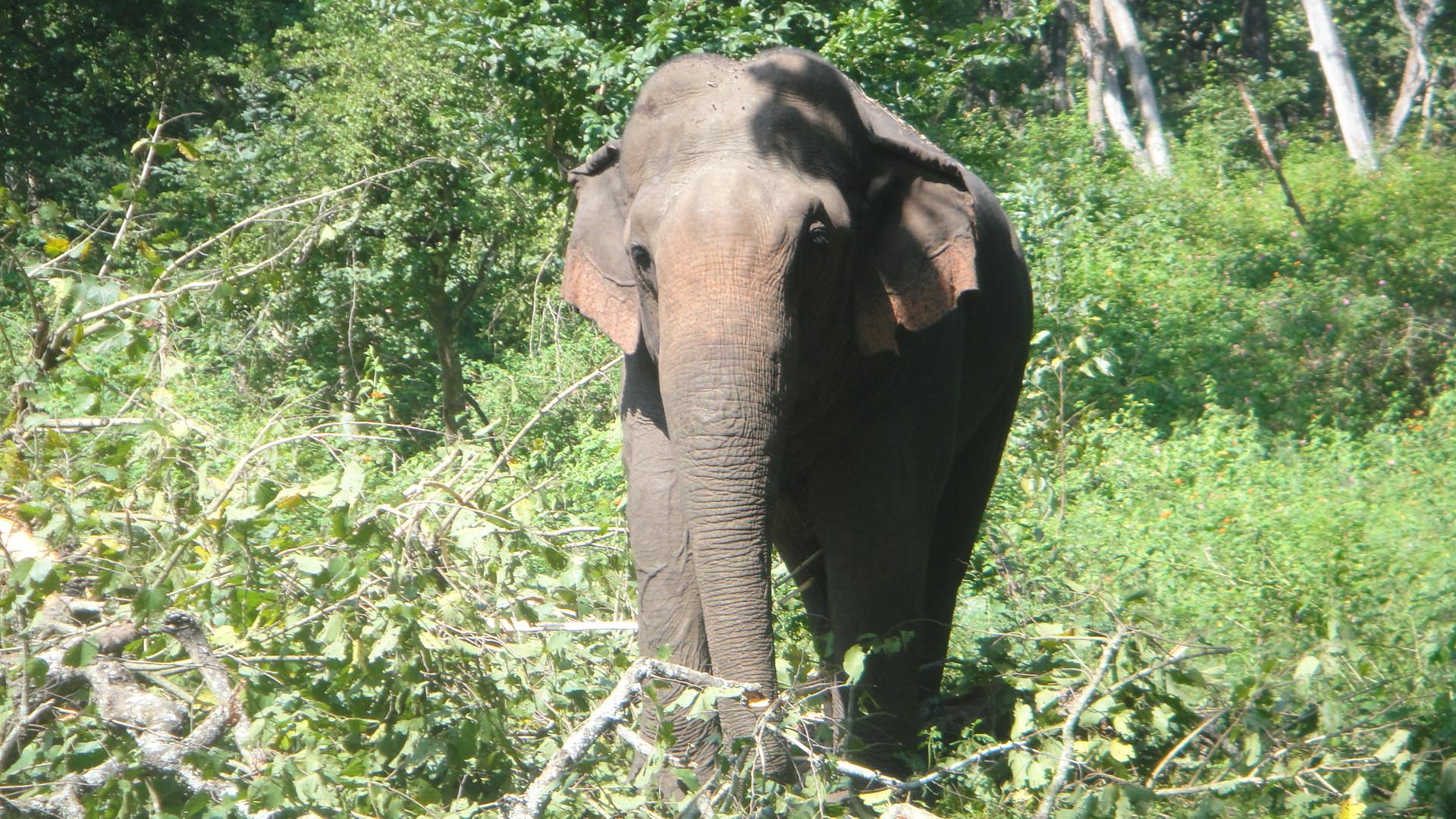 Single elephant walking in a jungle photo