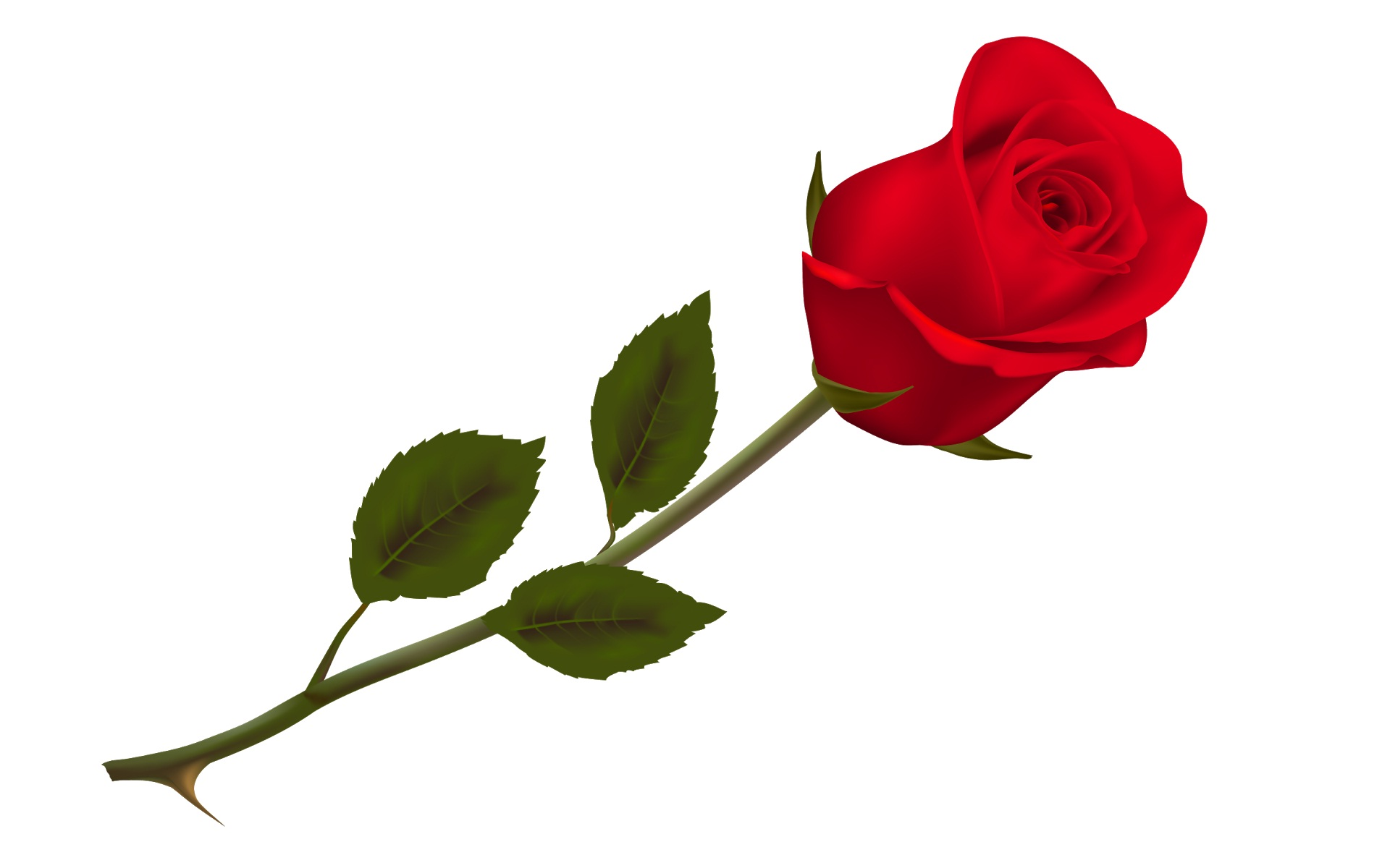 Single-red-rose-for-happy-rose-day-wishes.jpg (1920×1200) | Grunge ...