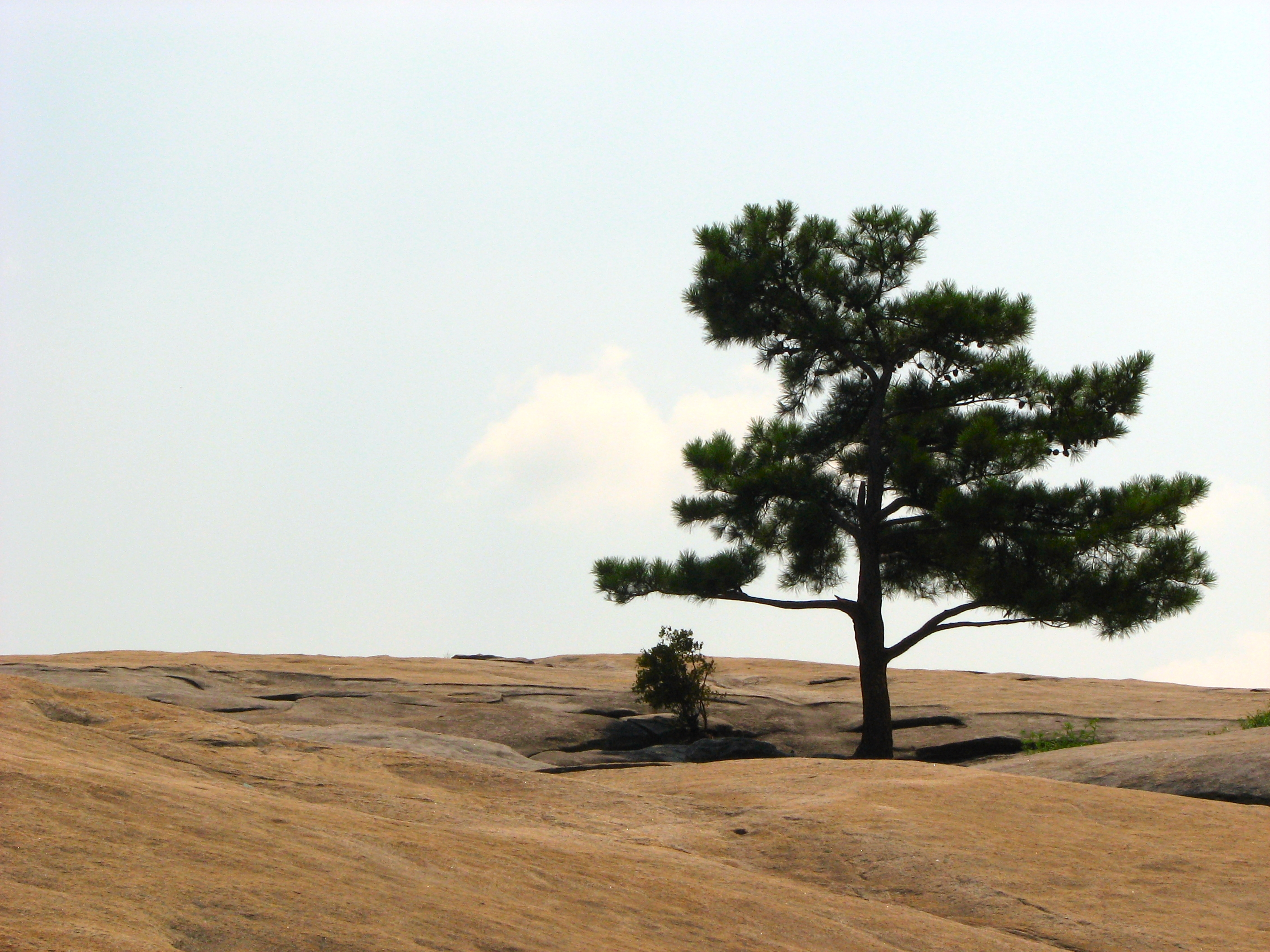 Single tree at the top of stone mountain photo