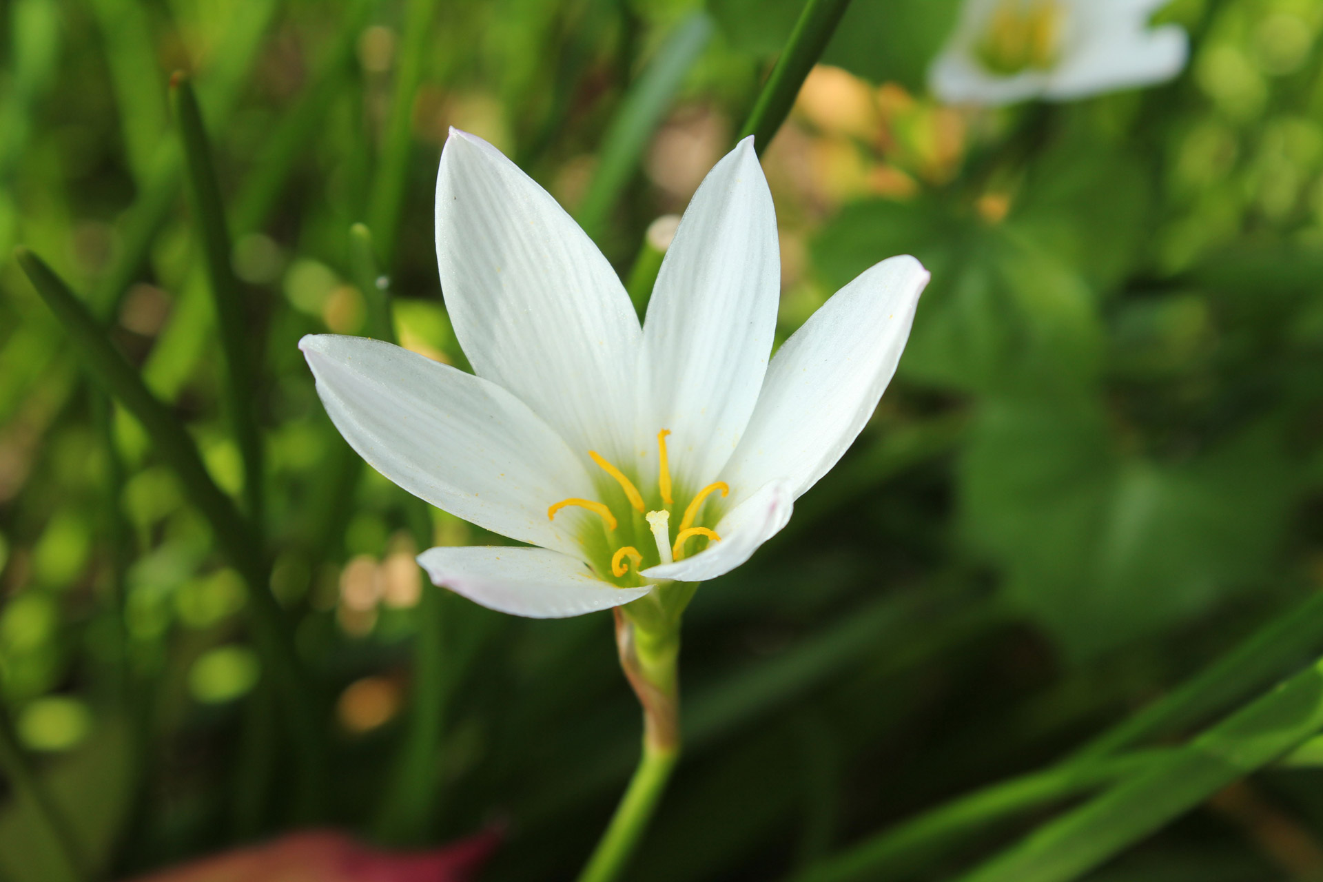 Free Photo White Flower Plant White Flowers Free Download
