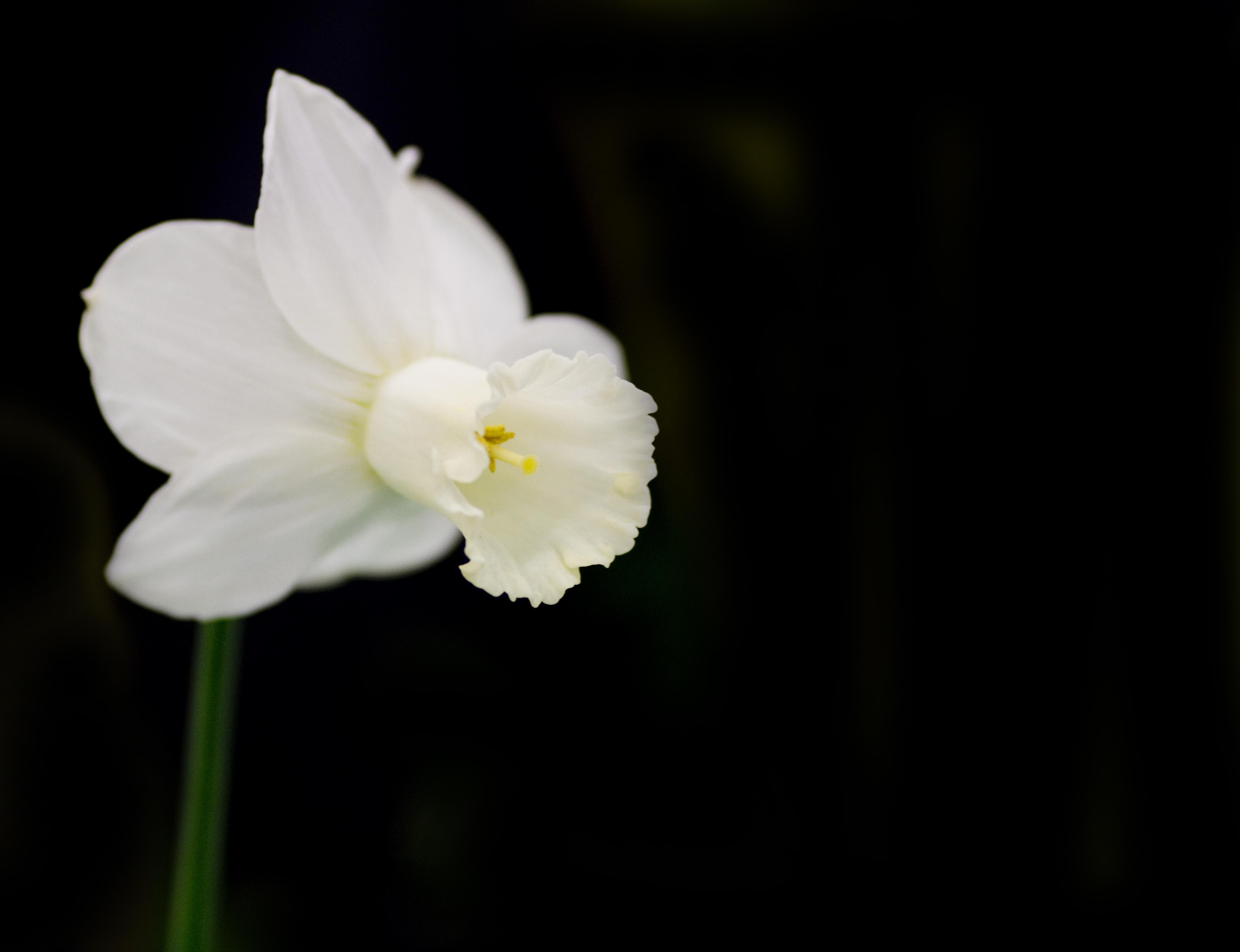 Free Photo Single White Flower Single Spring White Free