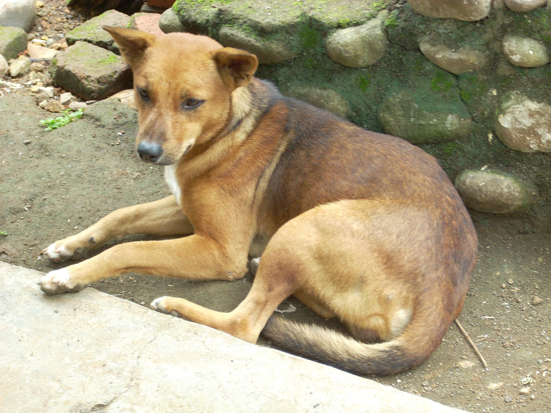 Sitting Dog, Animal, Dog, Fur, K9, HQ Photo
