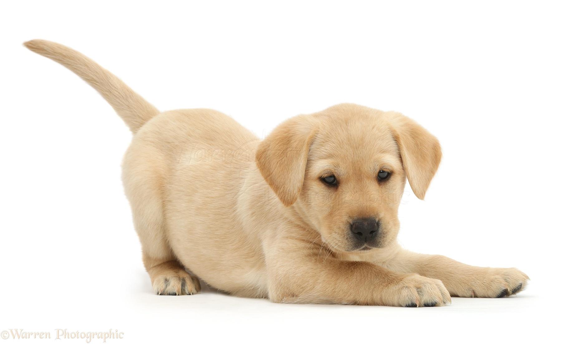 Merrifield Dog Walking and Pet Sitting