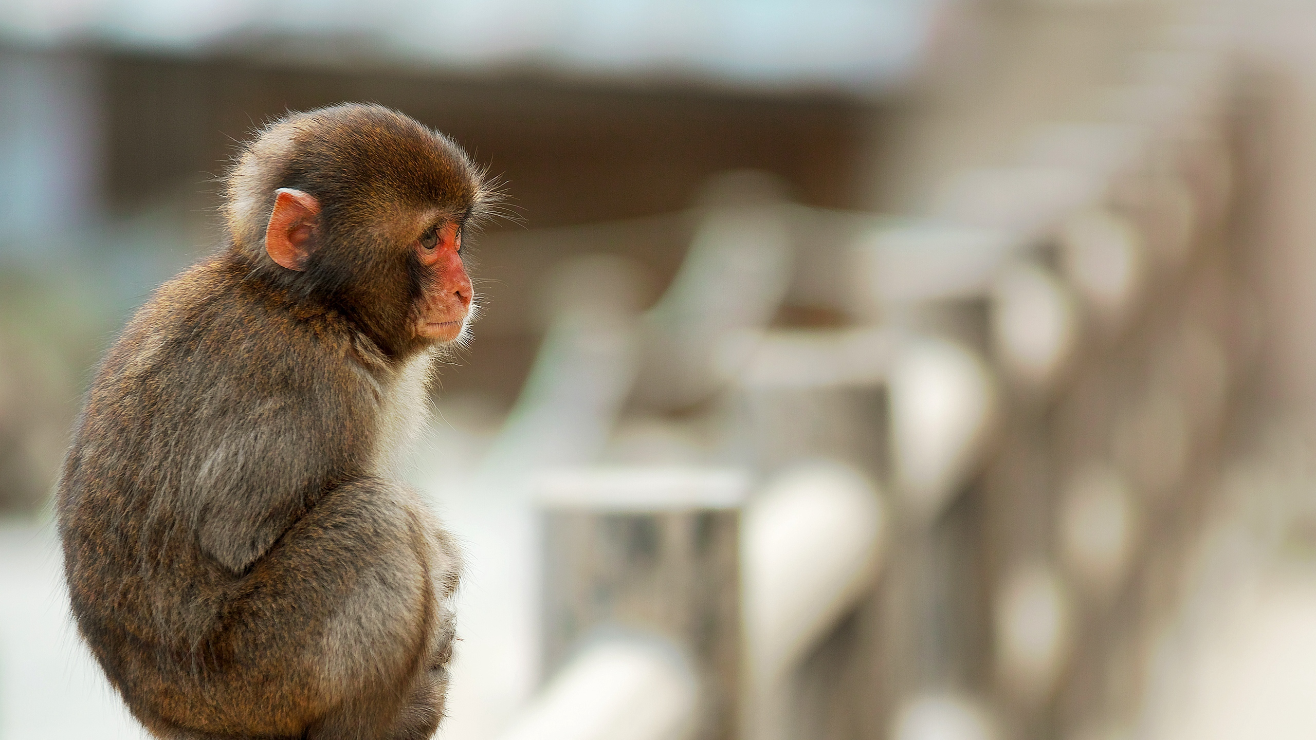 Download wallpaper 2560x1440 monkey, sitting, small widescreen 16:9 ...