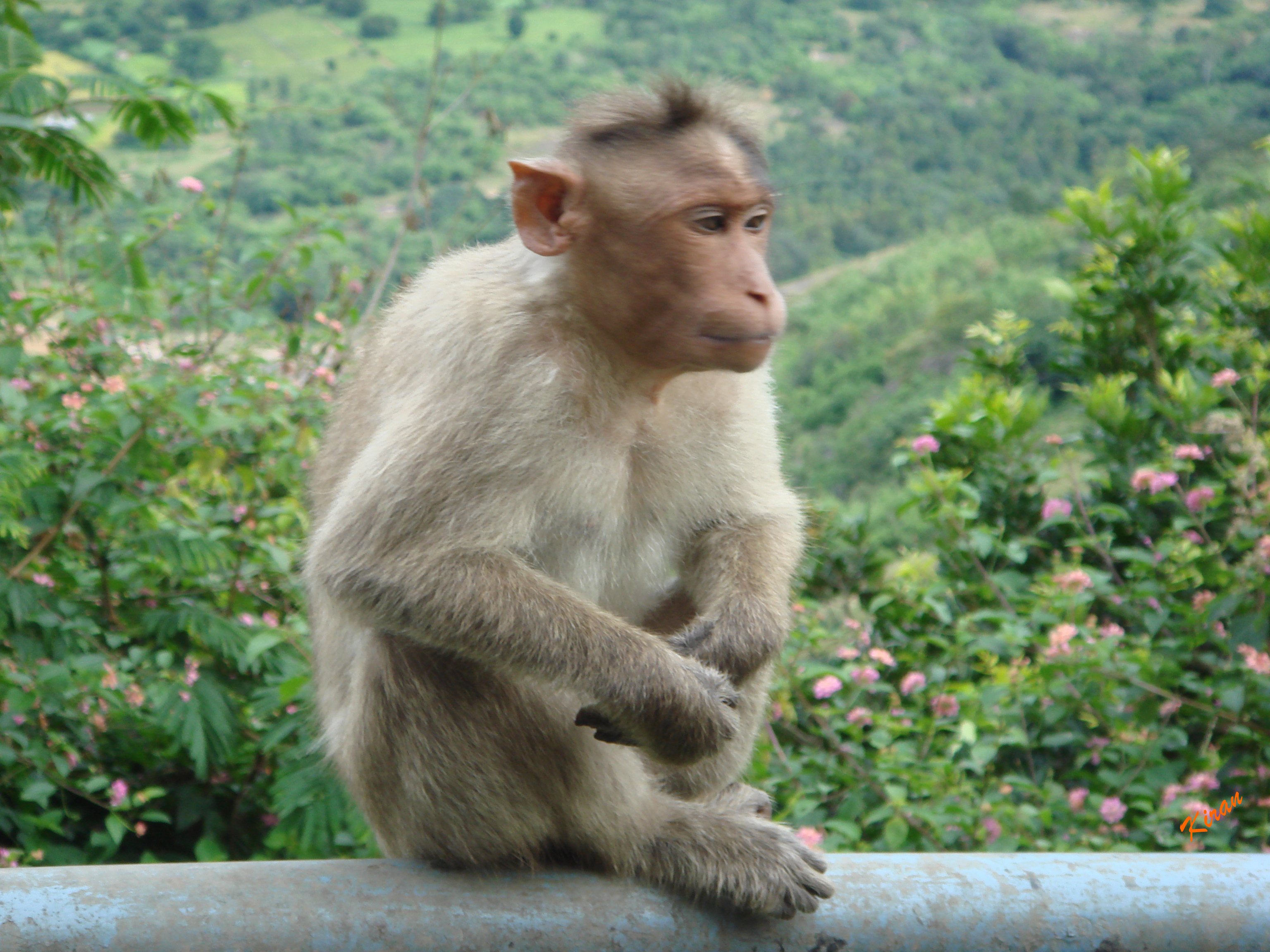 Sitting Monkey, Animal, Ape, Monkey, Primate, HQ Photo