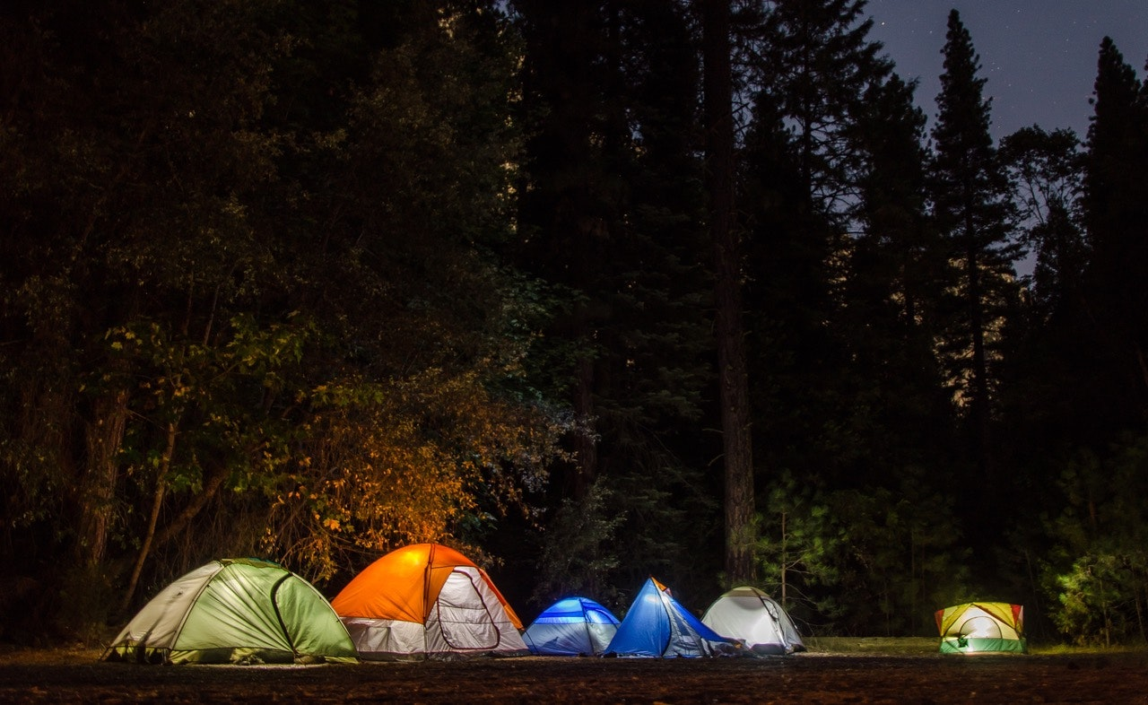 Six Camping Tents in Forest, Adventure, Night, Trees, Travel, HQ Photo