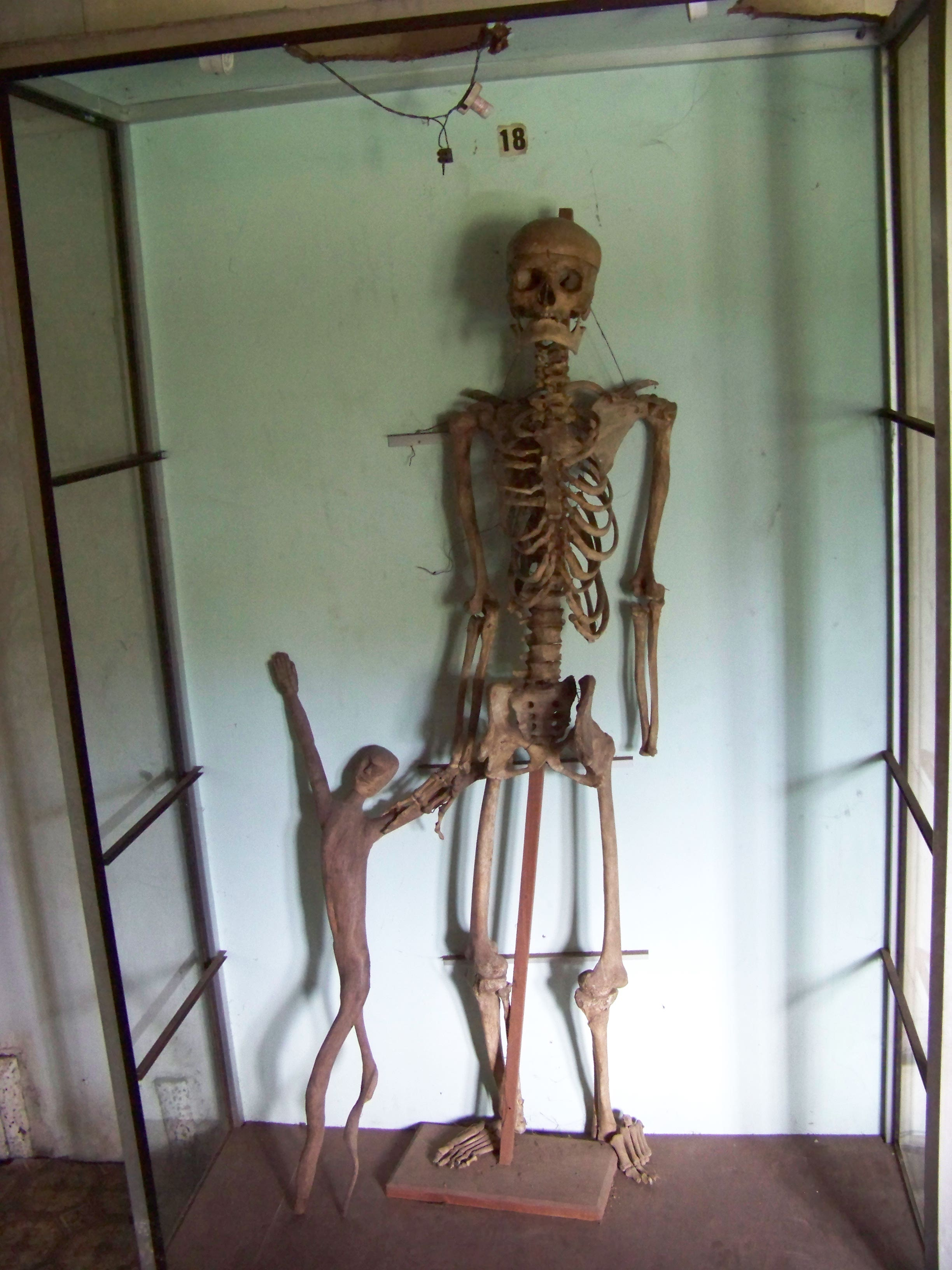 Skeleton, Scary, Person, Skull, Teeth, HQ Photo