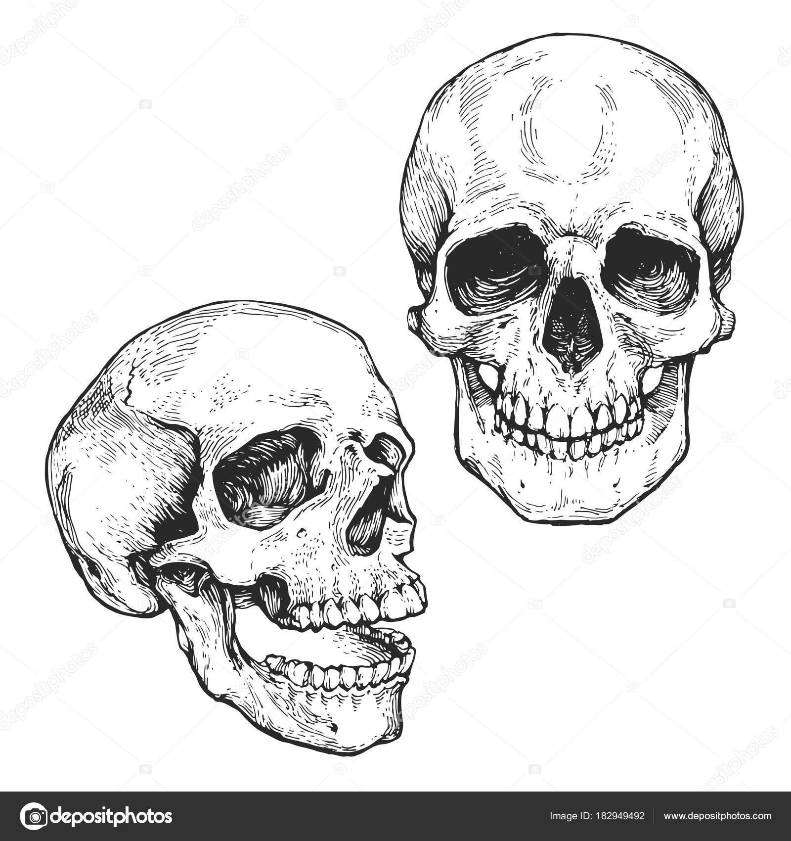 Skull Skeleton Head Set Engraving Ink Hand Drawn Line Art — Stock ...