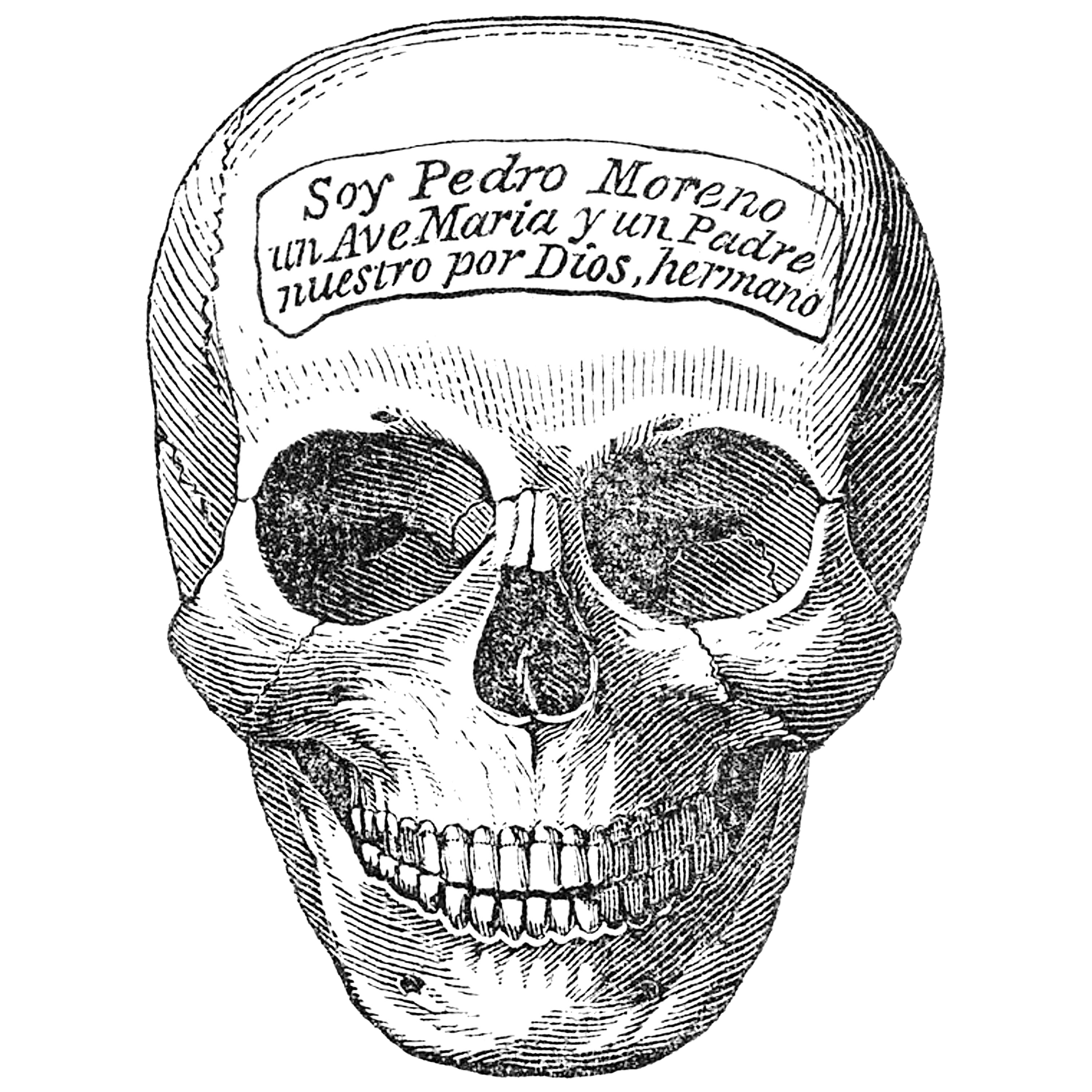 Skeleton Head, Human, Head, Graphics, Bone, HQ Photo