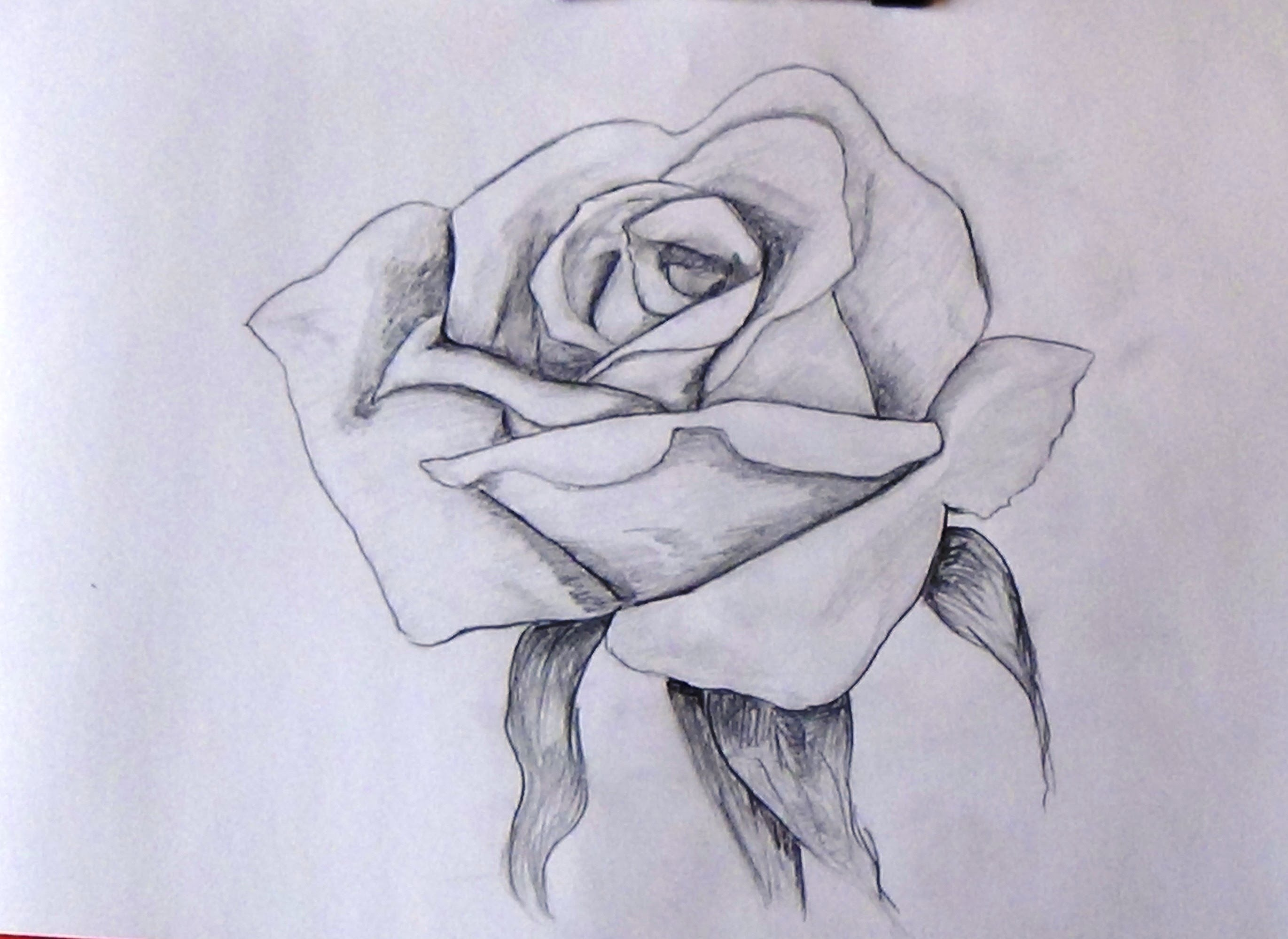 How To Sketch A Rose Step By Step Tutorial For Beginners - YouTube