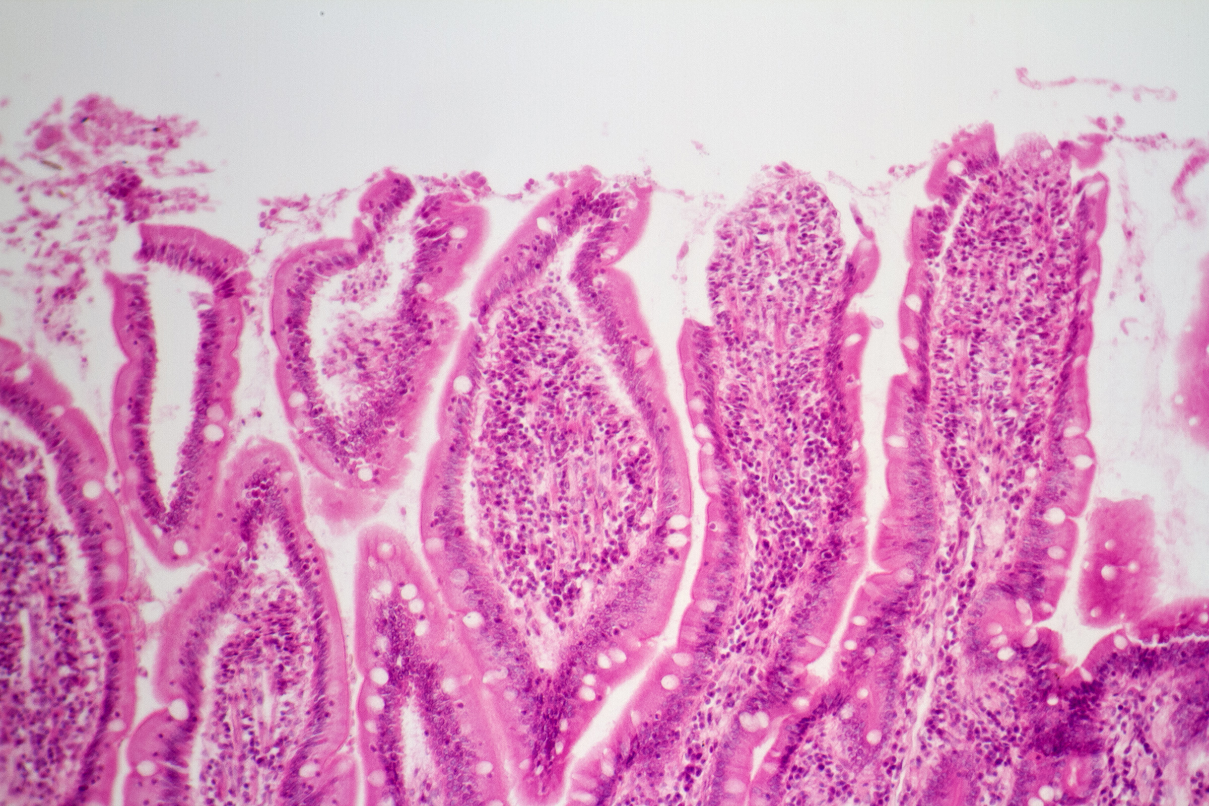 Skin cells, Anatomical, Microscope, Old, Organ, HQ Photo