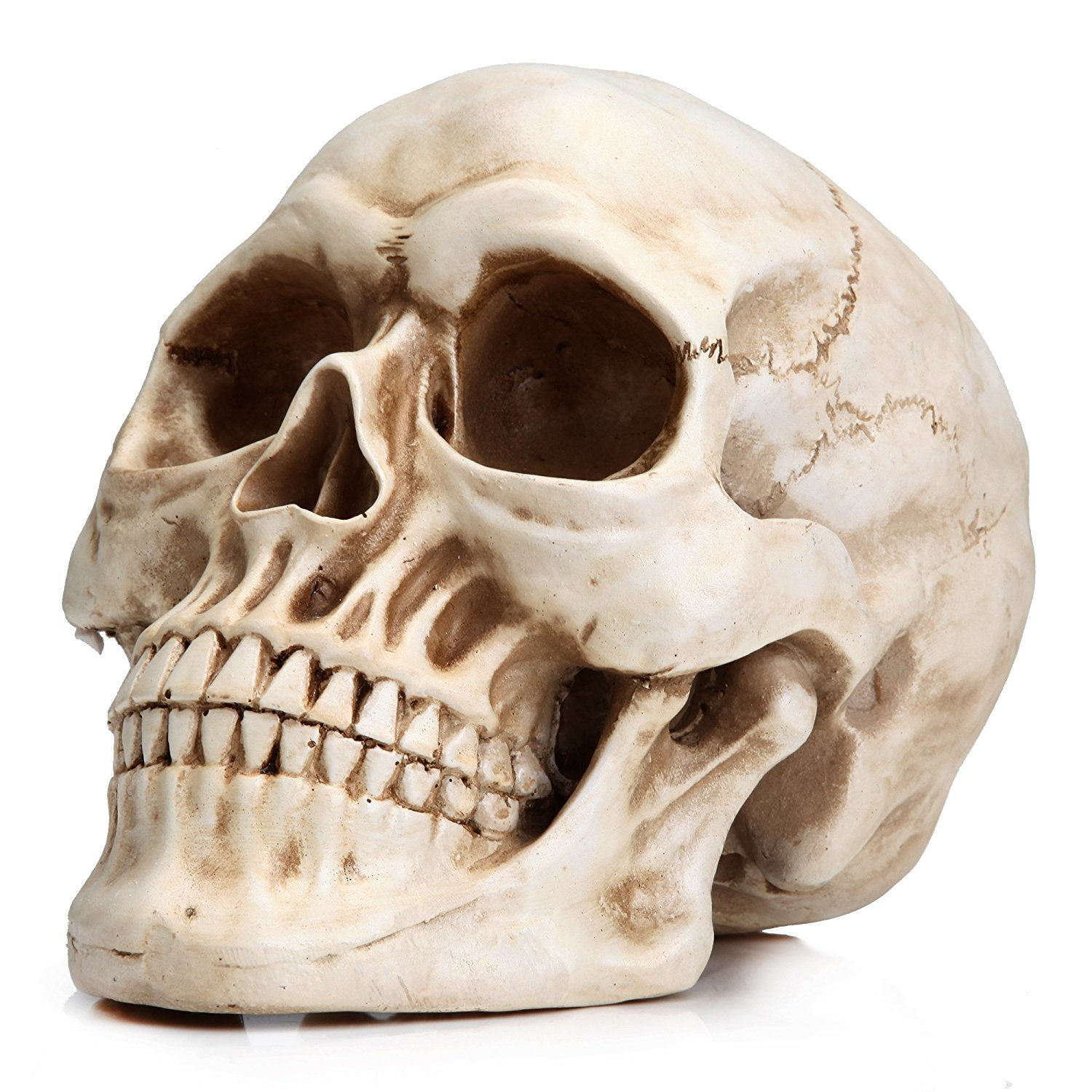 Readaeer Life Size Replica Realistic Human Skull Head Bone Model ...
