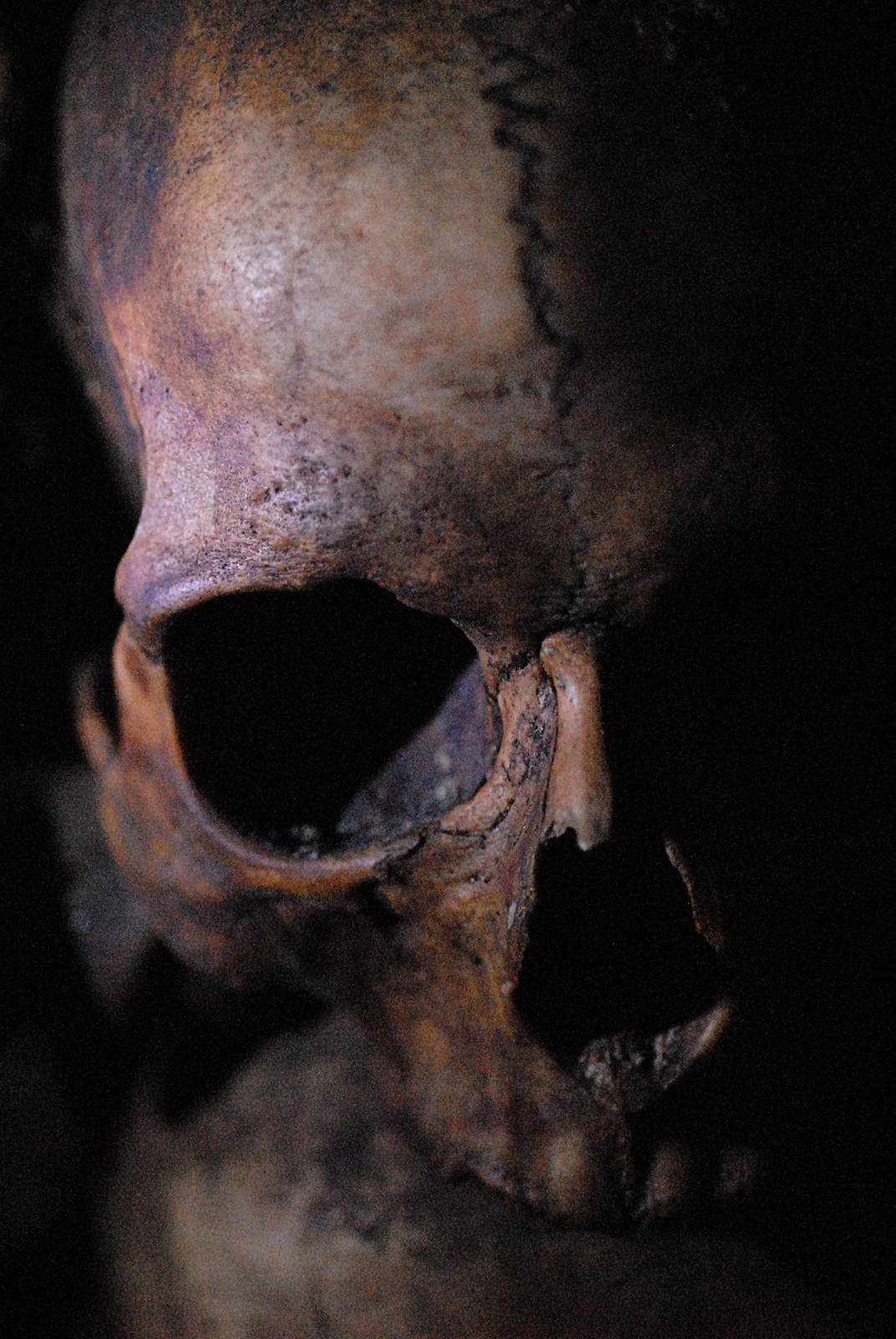 Skull, Skeleton, Skulls, Terror, Human, HQ Photo