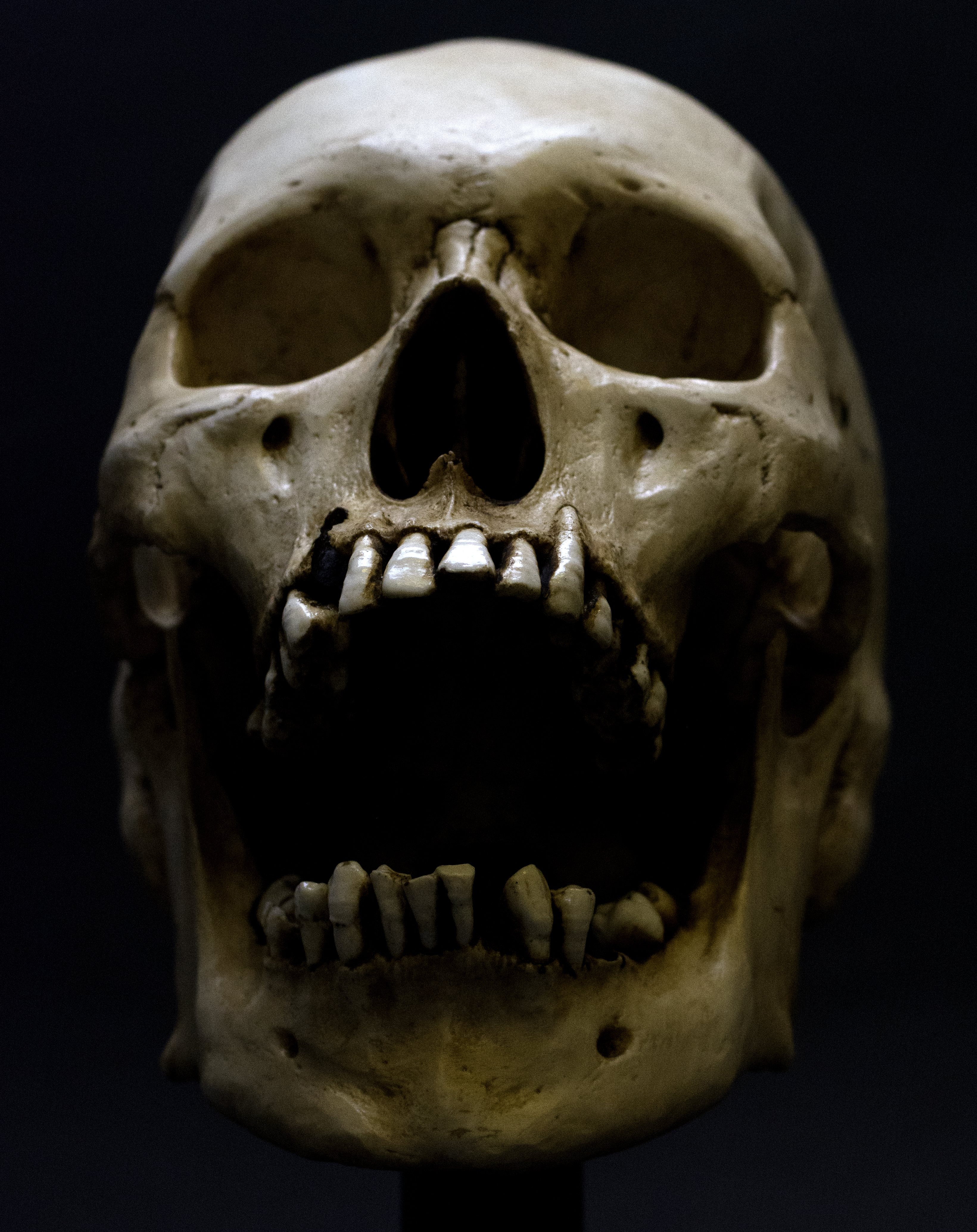 5 Weird Facts About The Human Skull (and 5 High Res Images)