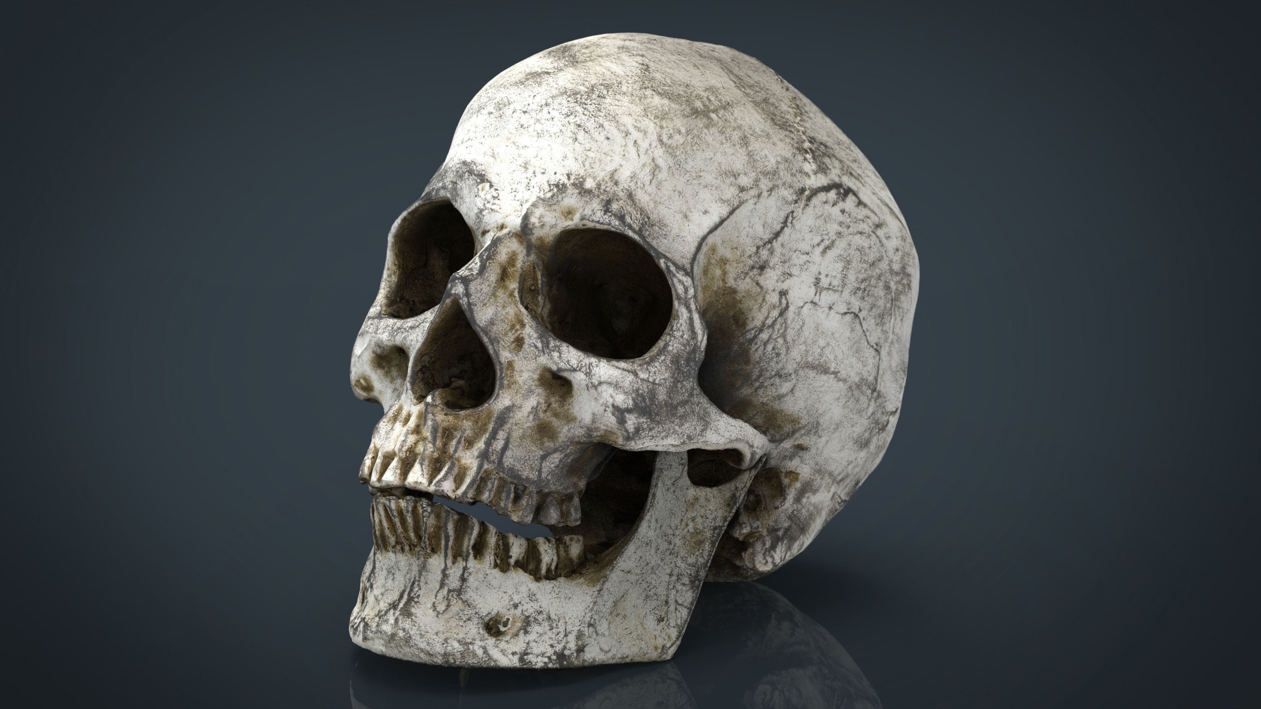 3D asset Skull and Jaw | CGTrader