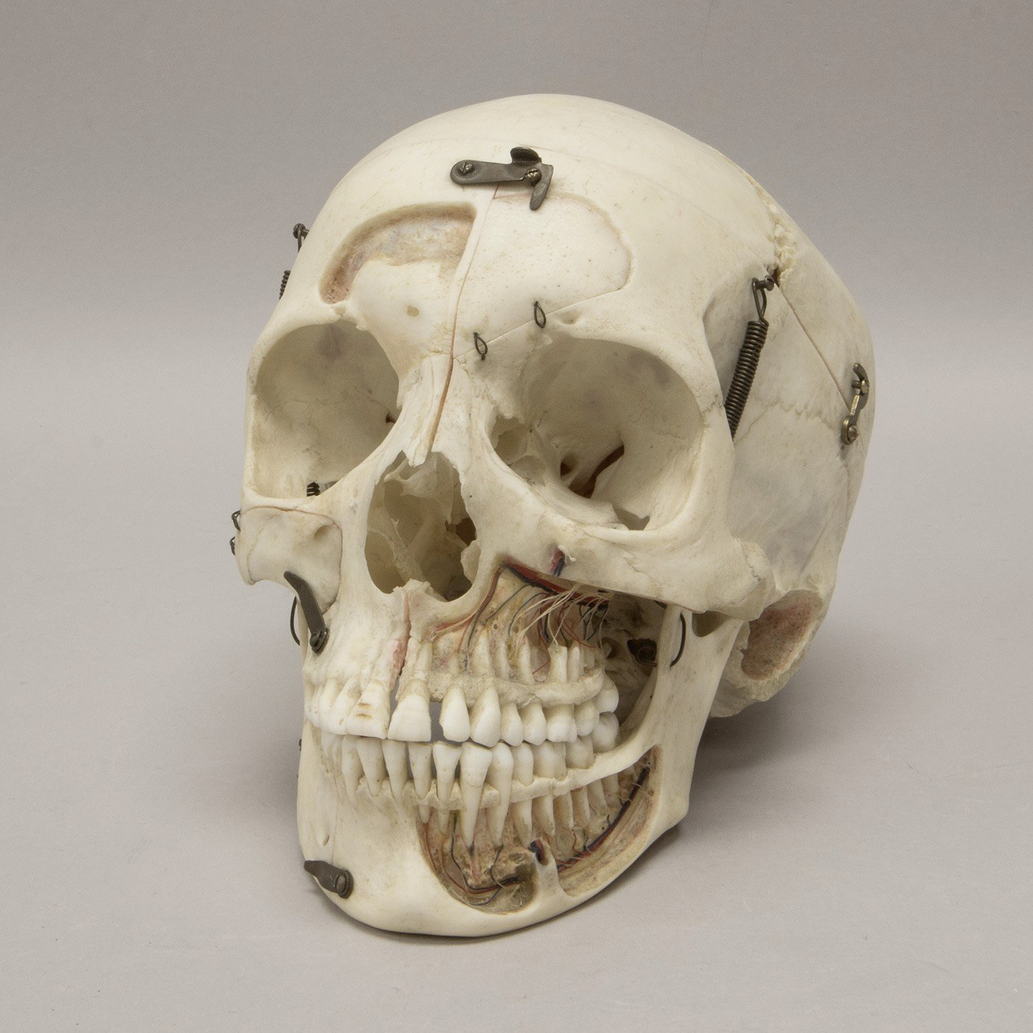 Free photo: Skull - Head, Scary, Halloween - Free Download