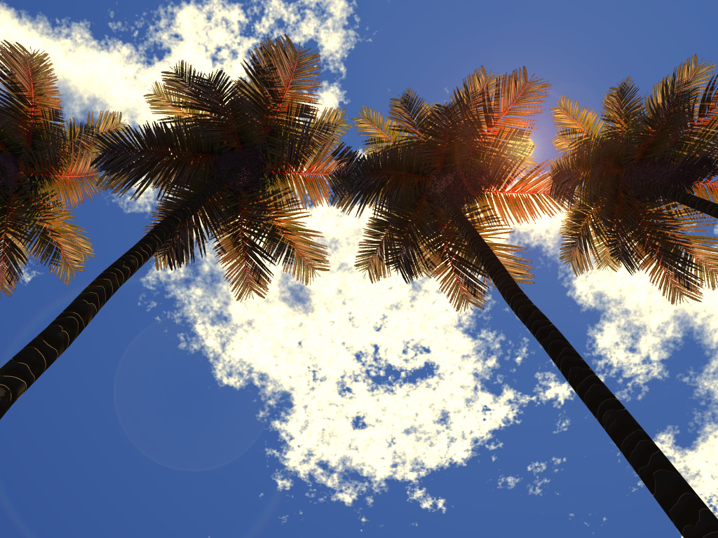 Sky, 3d, Clouds, Palm, Trees, HQ Photo
