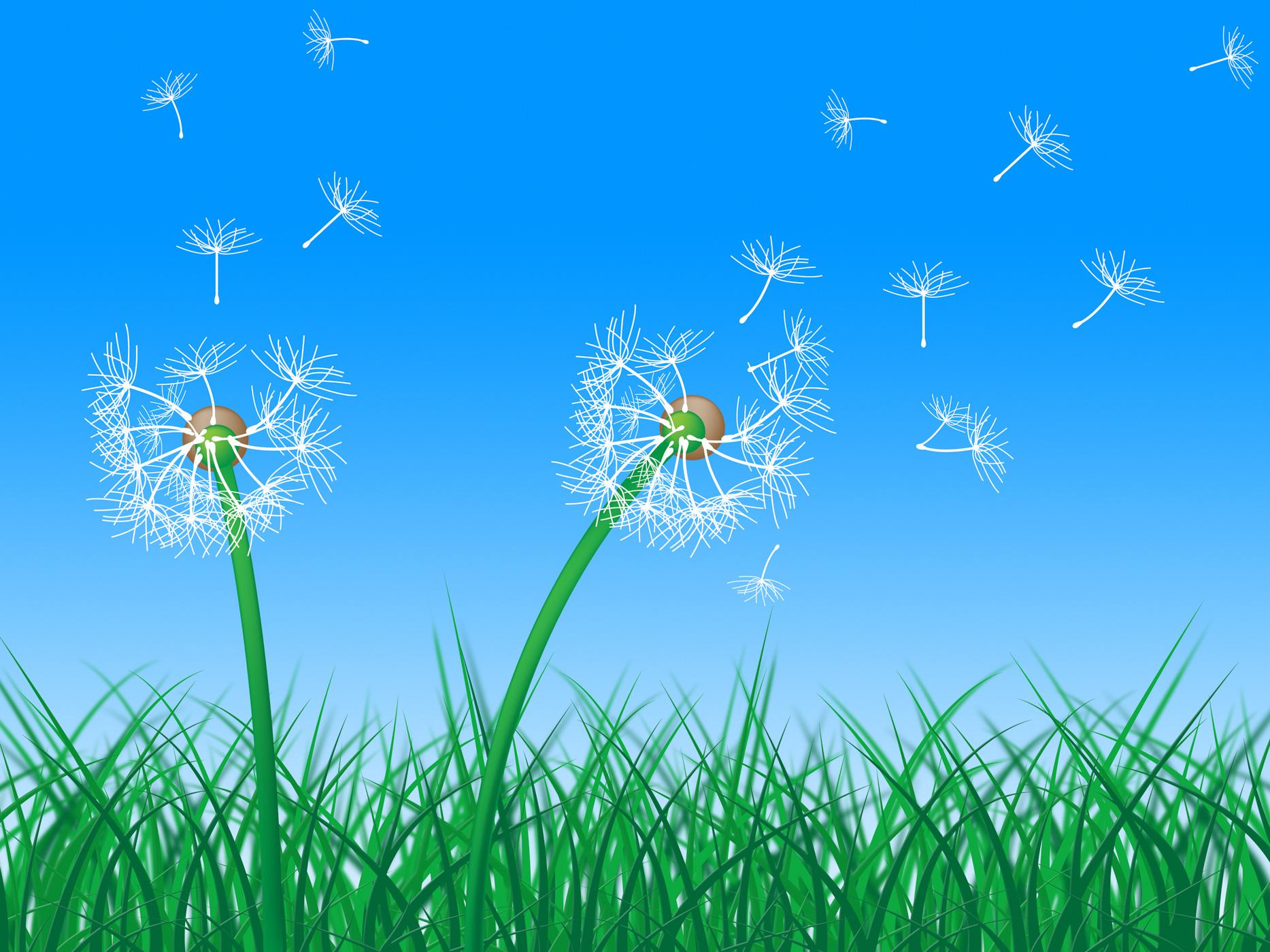 Sky grass represents dandelion hair and dandelions photo