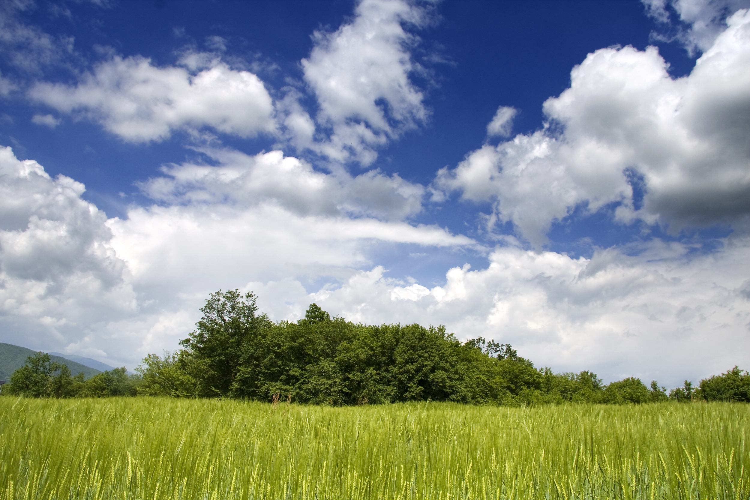 Sky, Blue, Clouds, Field, Green, HQ Photo