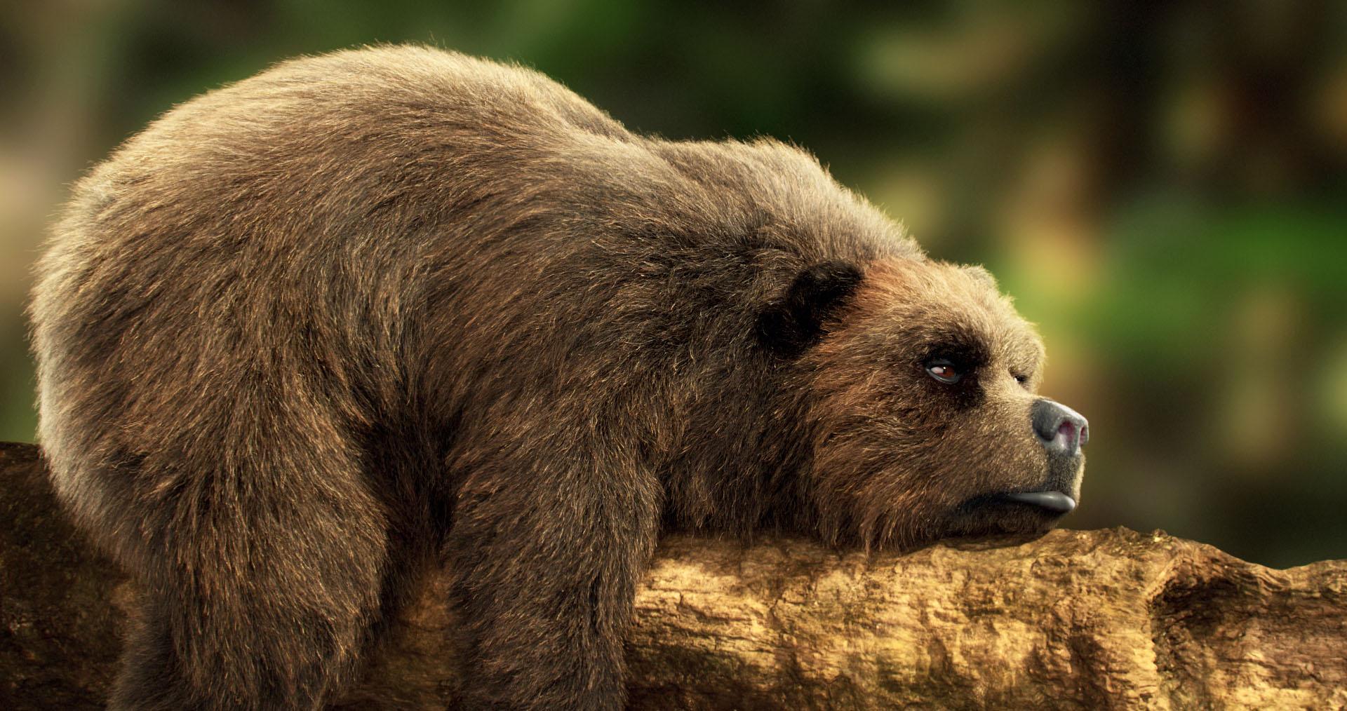 Sleeping bear by Jordan soler / Scenes - 3dtotal.com