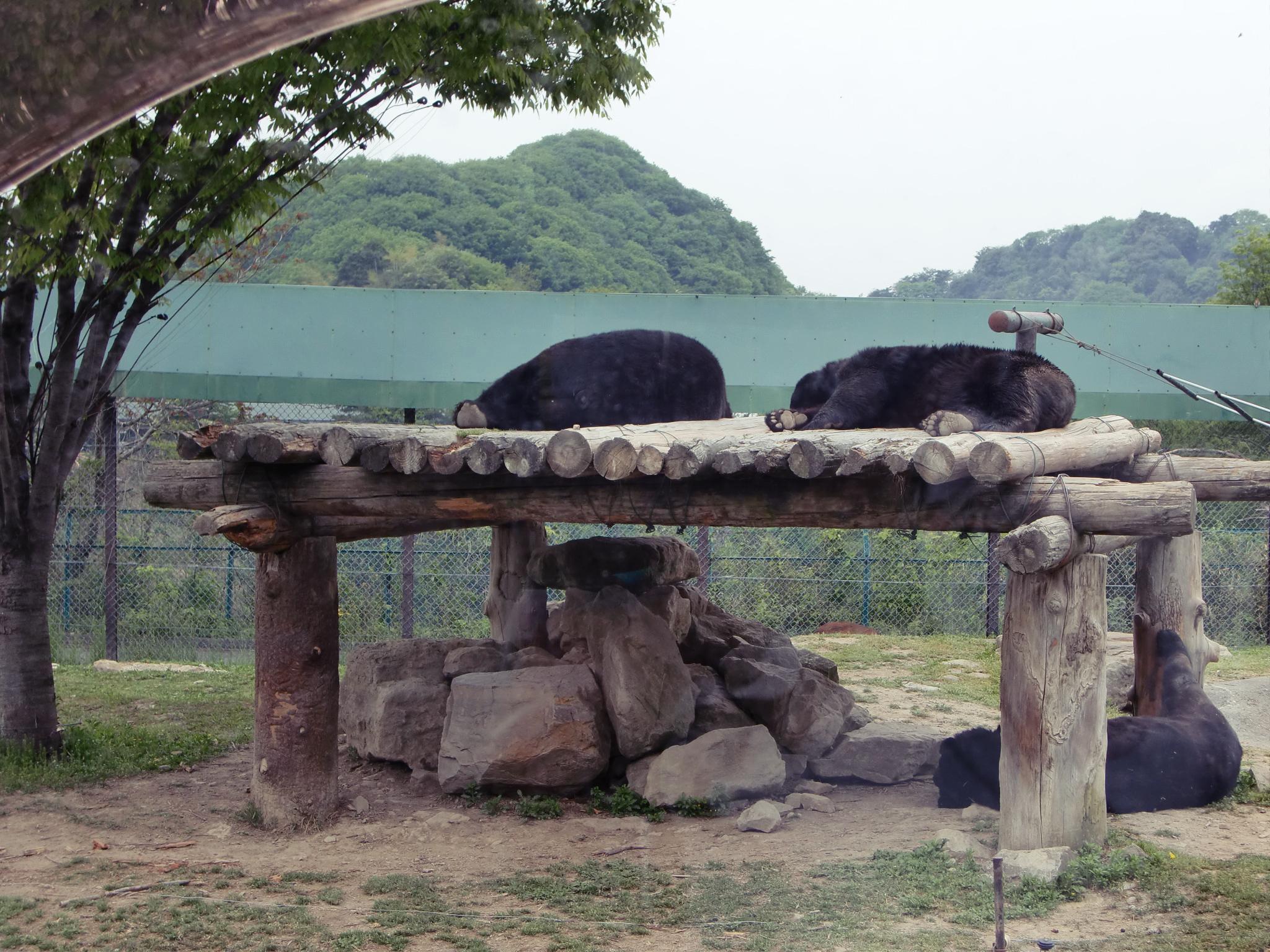 Sleeping bear, Bear, Landscape, Sleeping, Zoo, HQ Photo