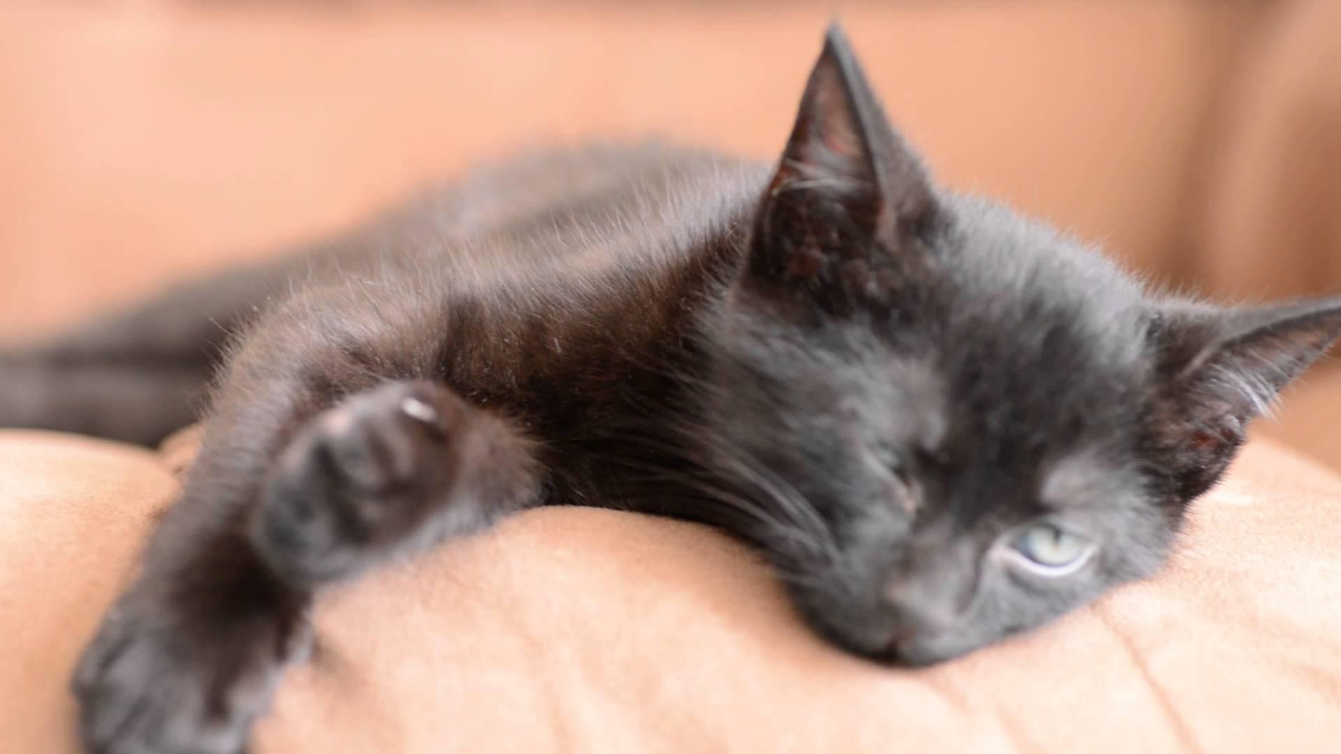 Sleeping black cat photo