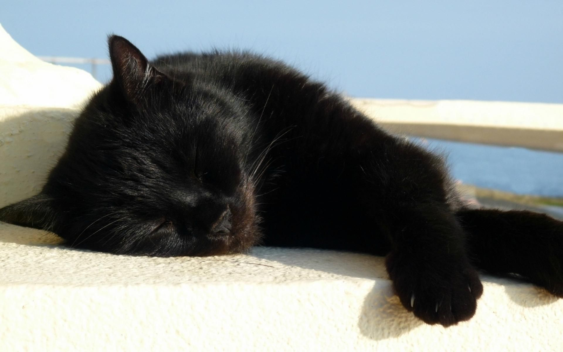 Image result for black cat sleeping
