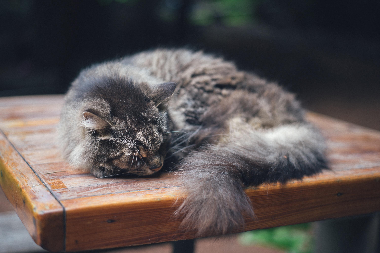 Sleeping Cat Free Photo - ISO Republic