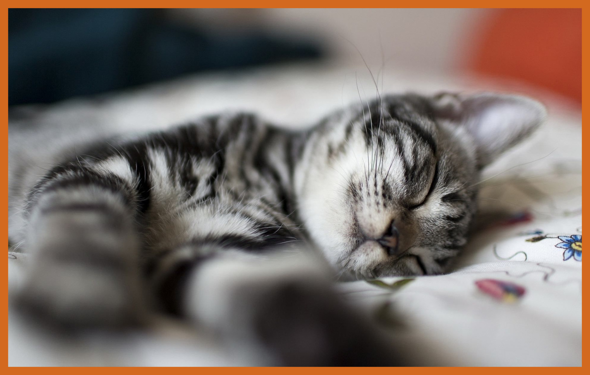 Unbelievable Fantastic Sleeping Cat Wallpaper Px Hdwall Picture For ...