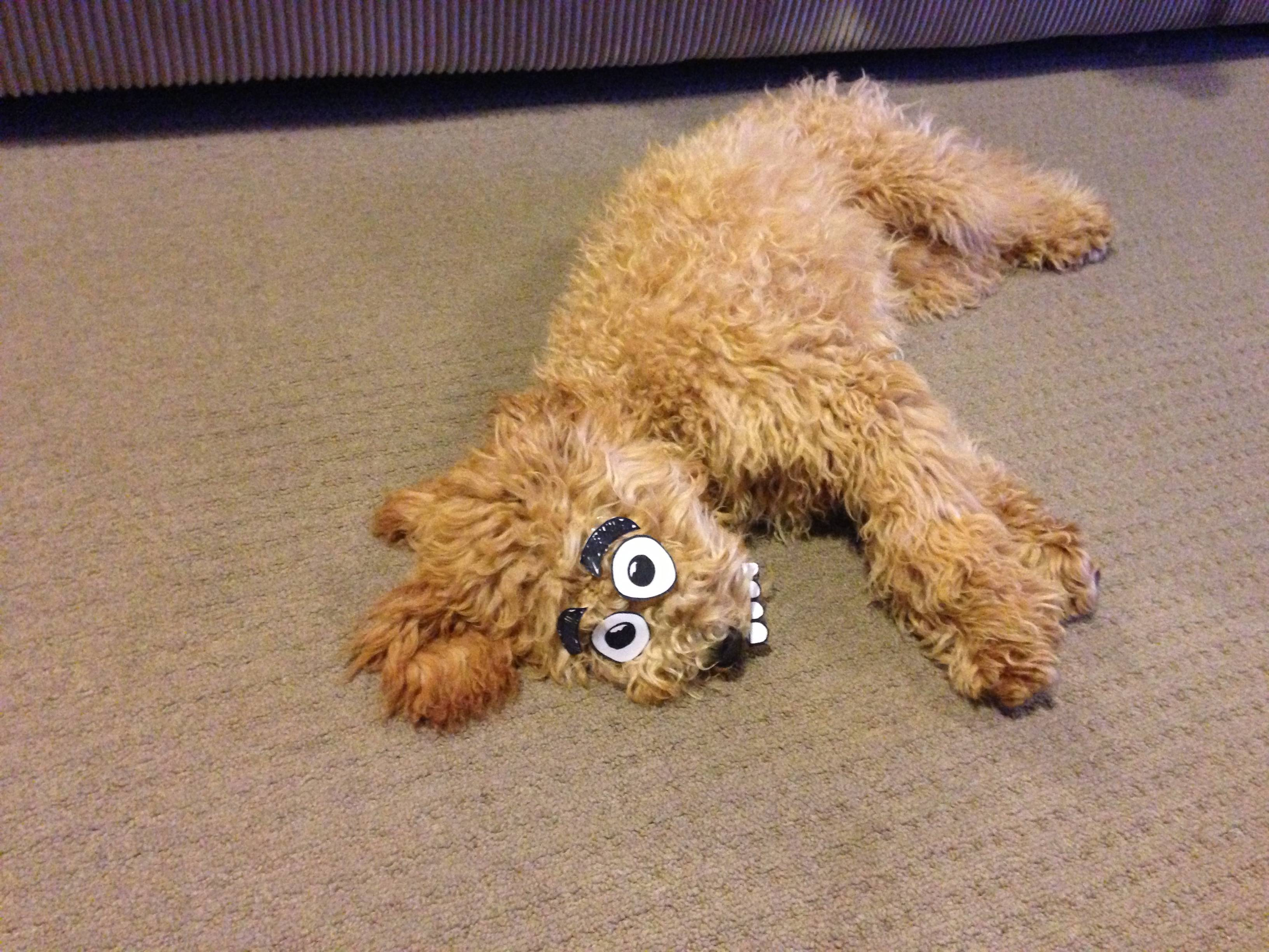 Sleeping Dog + Paper Eyeballs = Genius