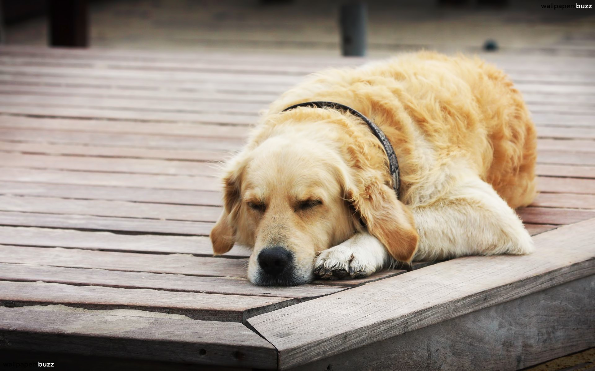 HD Sleeping Dog Wallpapers and Photos | HD Animals Wallpapers