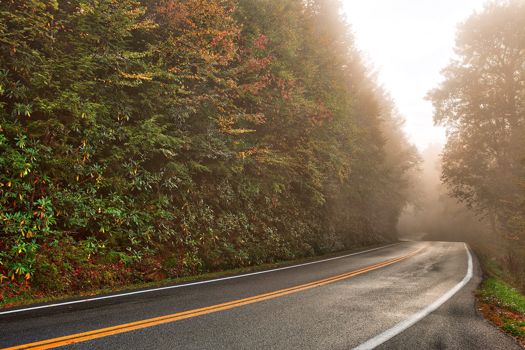 Slick mist forest road - hdr photo