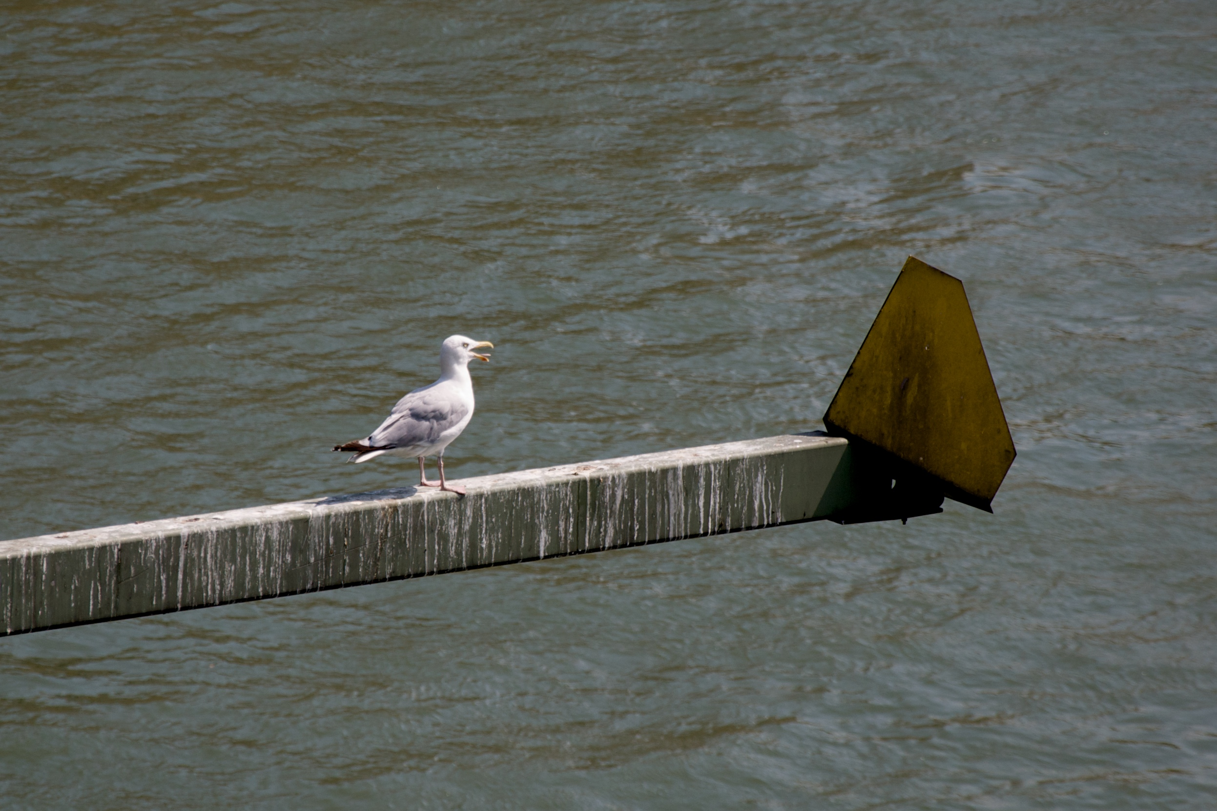 File:The old man and the seagull - Flickr - map.jpg - Wikimedia Commons
