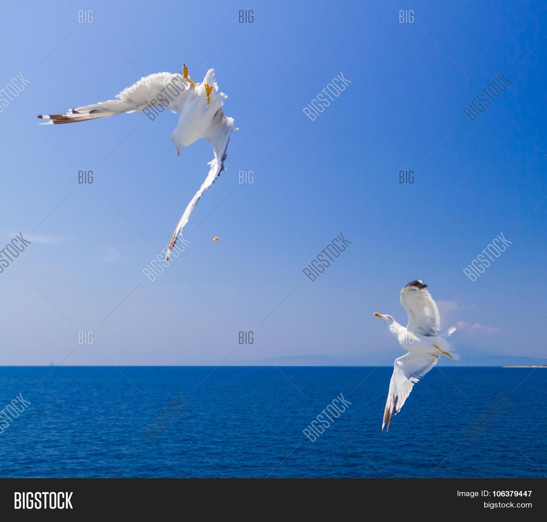 Feeding Seagulls Ferry, Greece Image & Photo | Bigstock