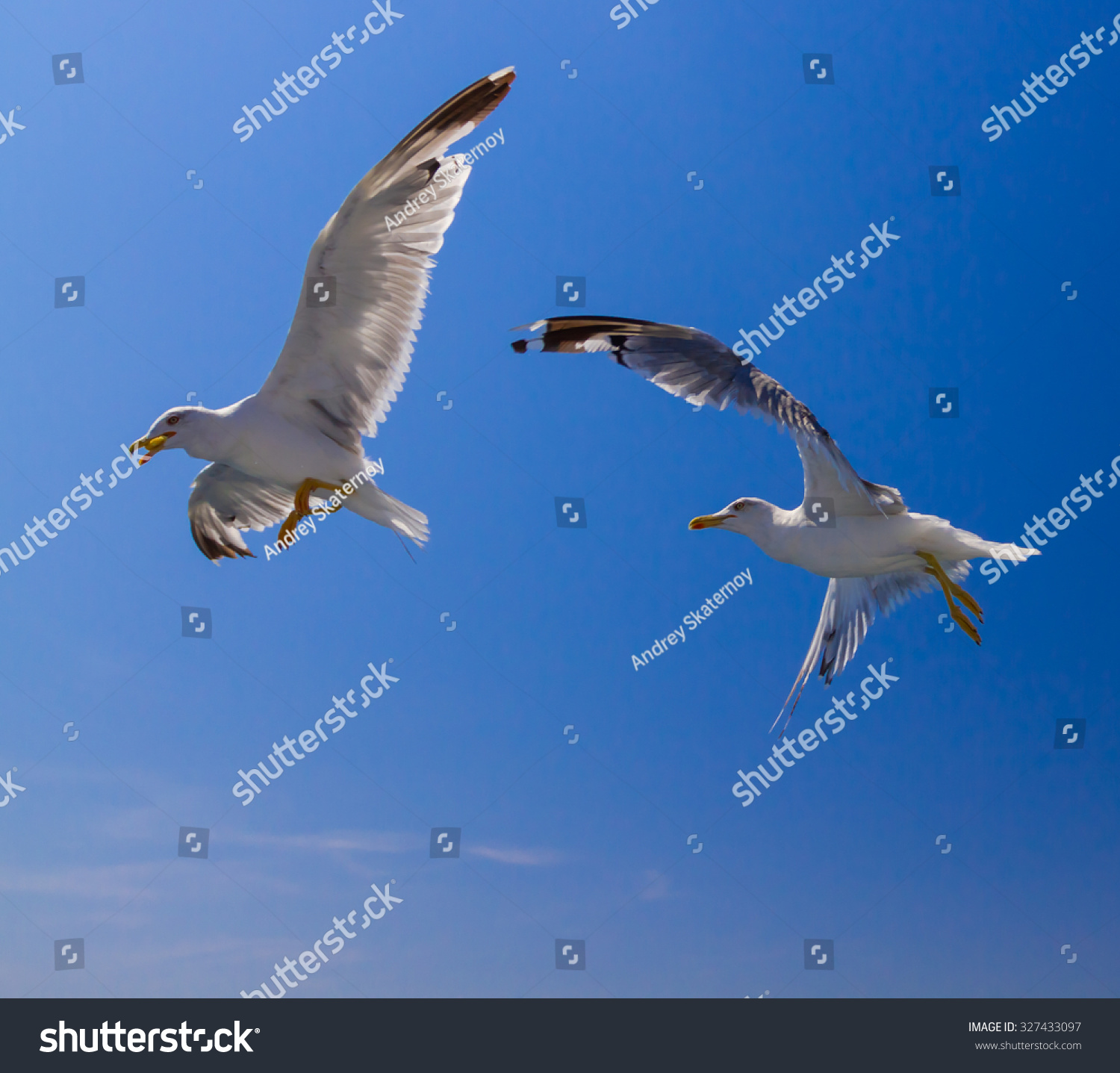 Many Different Species Seagulls Circling Around Stock Photo (Royalty ...