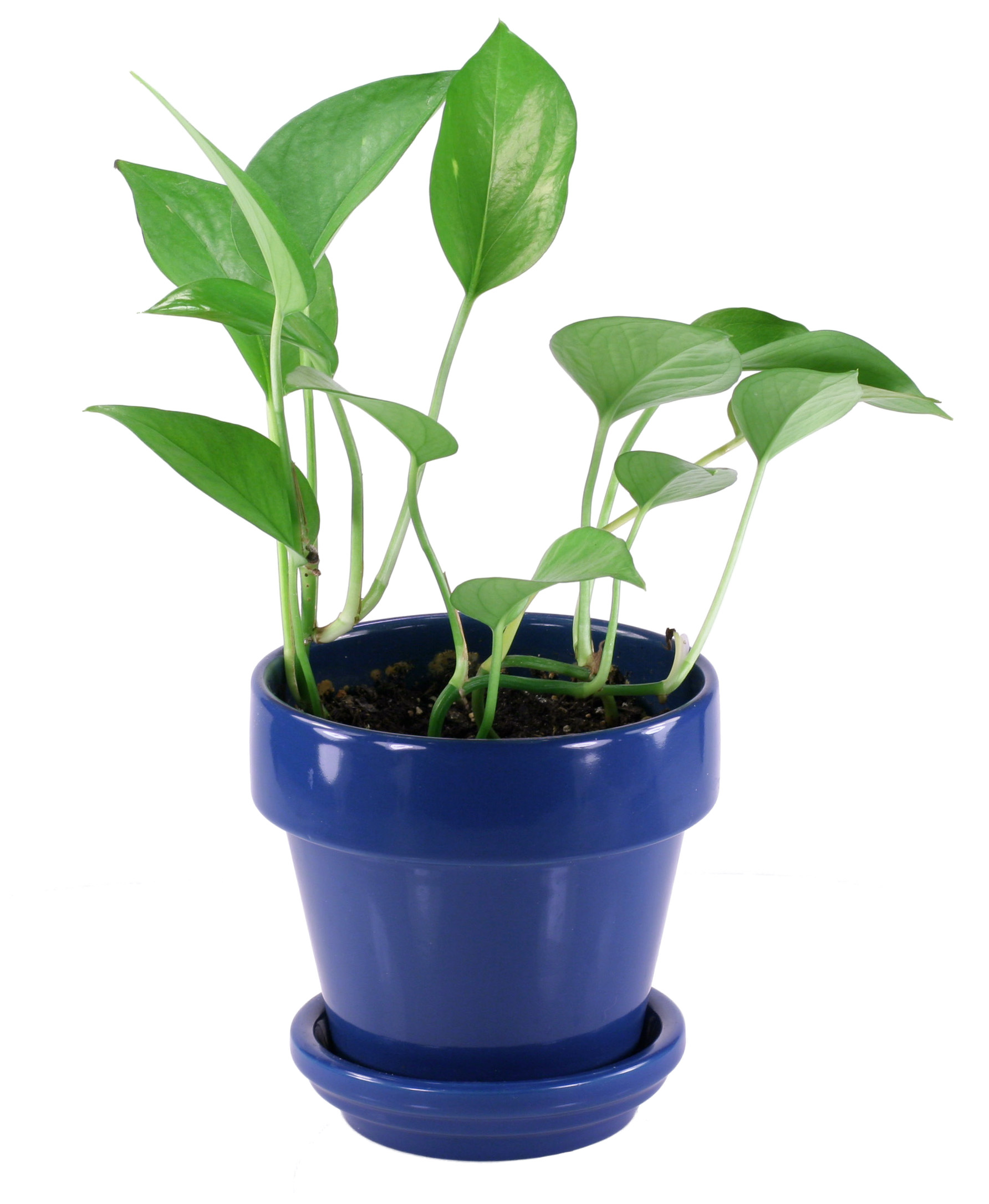 Best Indoor Plants For Small Pots: Free Photo: Small House Plant