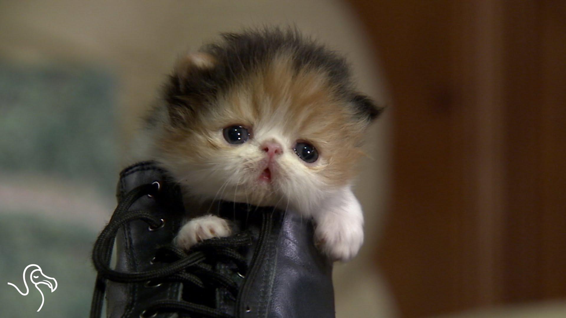 Tiny Kitten in a Shoe - YouTube