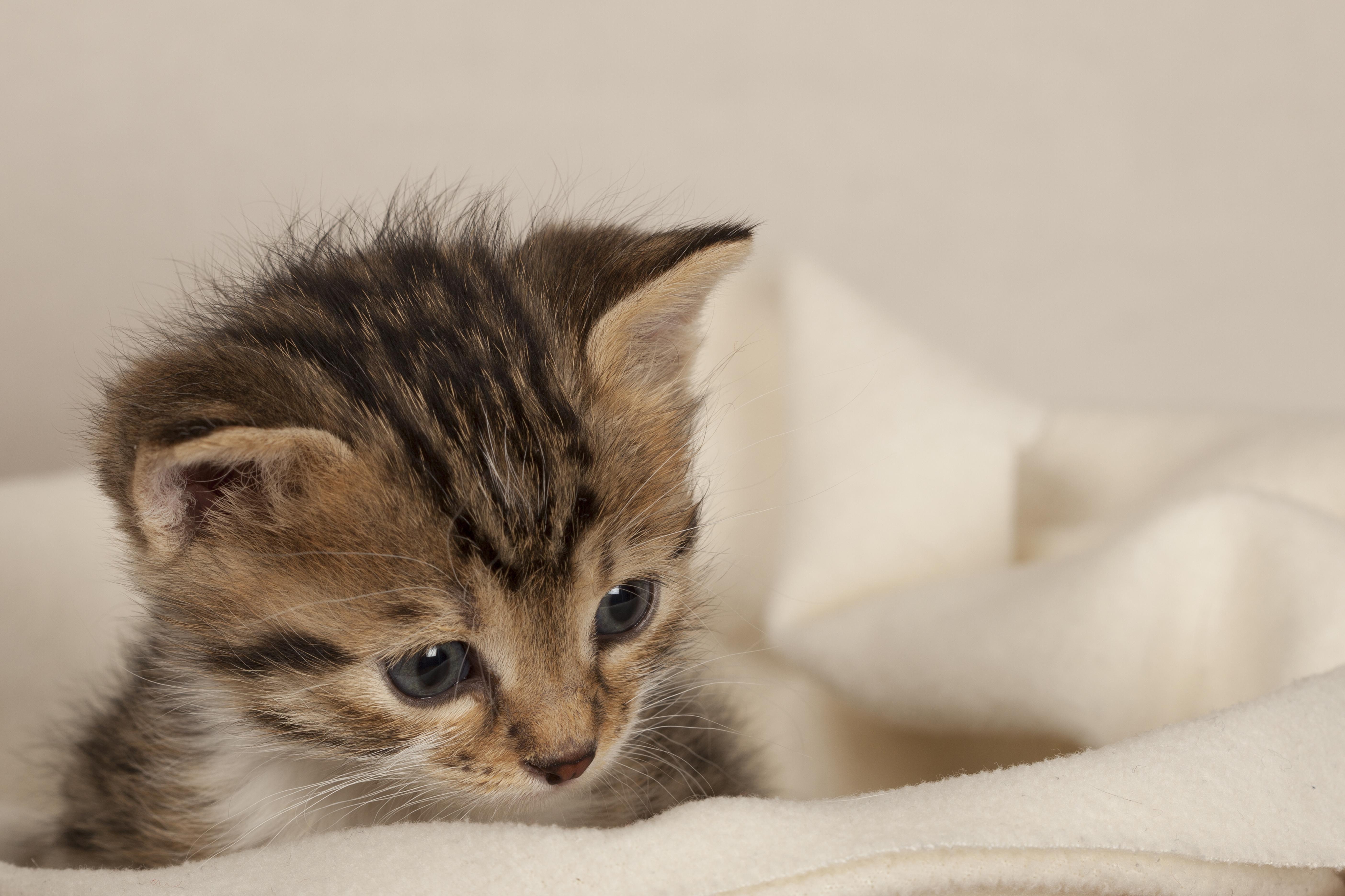 Kitten Bottle Baby Program - Houston Pets Alive!