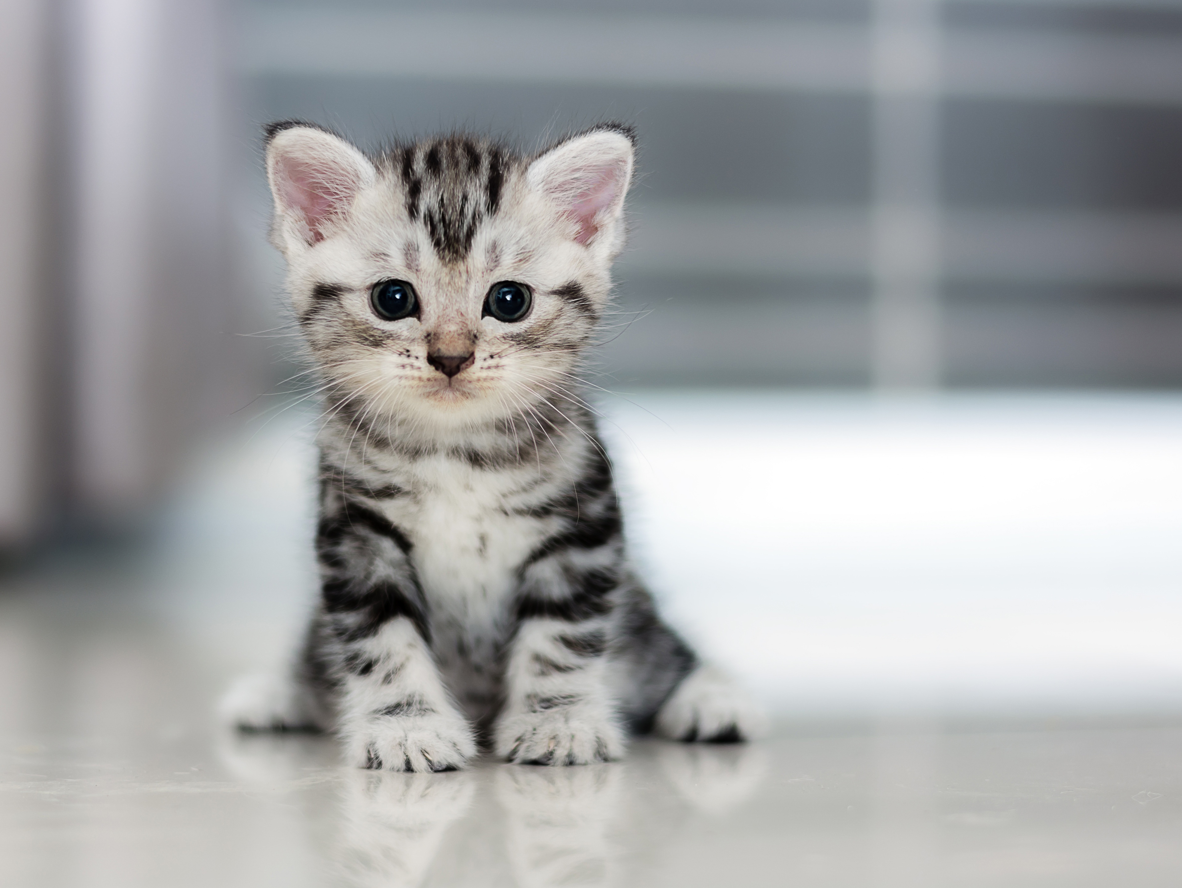 Small Kitten, HD Animals, 4k Wallpapers, Images, Backgrounds, Photos ...